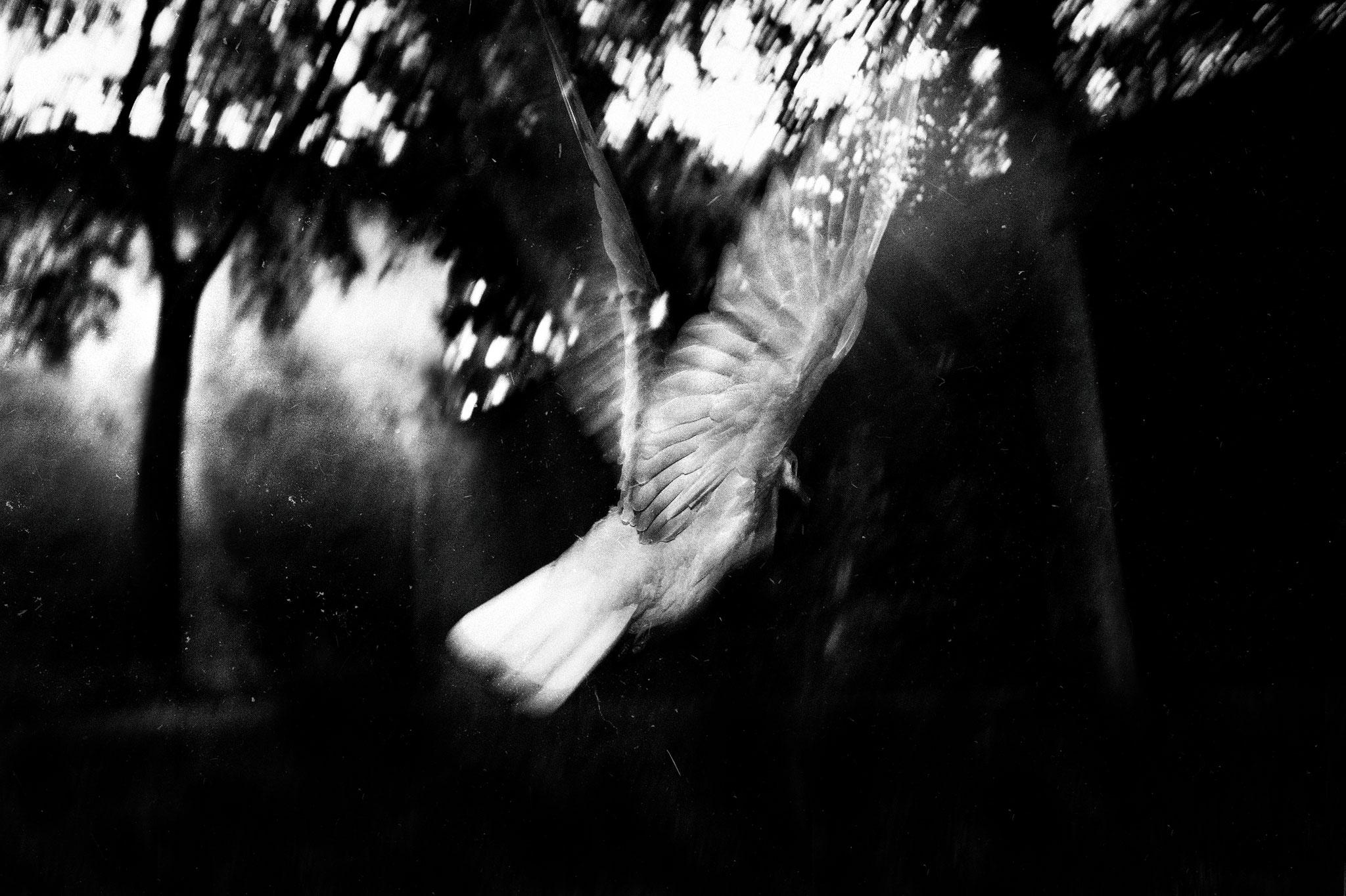 """Série """"Périphérique - 30 x 45 cm - Toulouse, avril 2018 - Photographie de David Siodos"""
