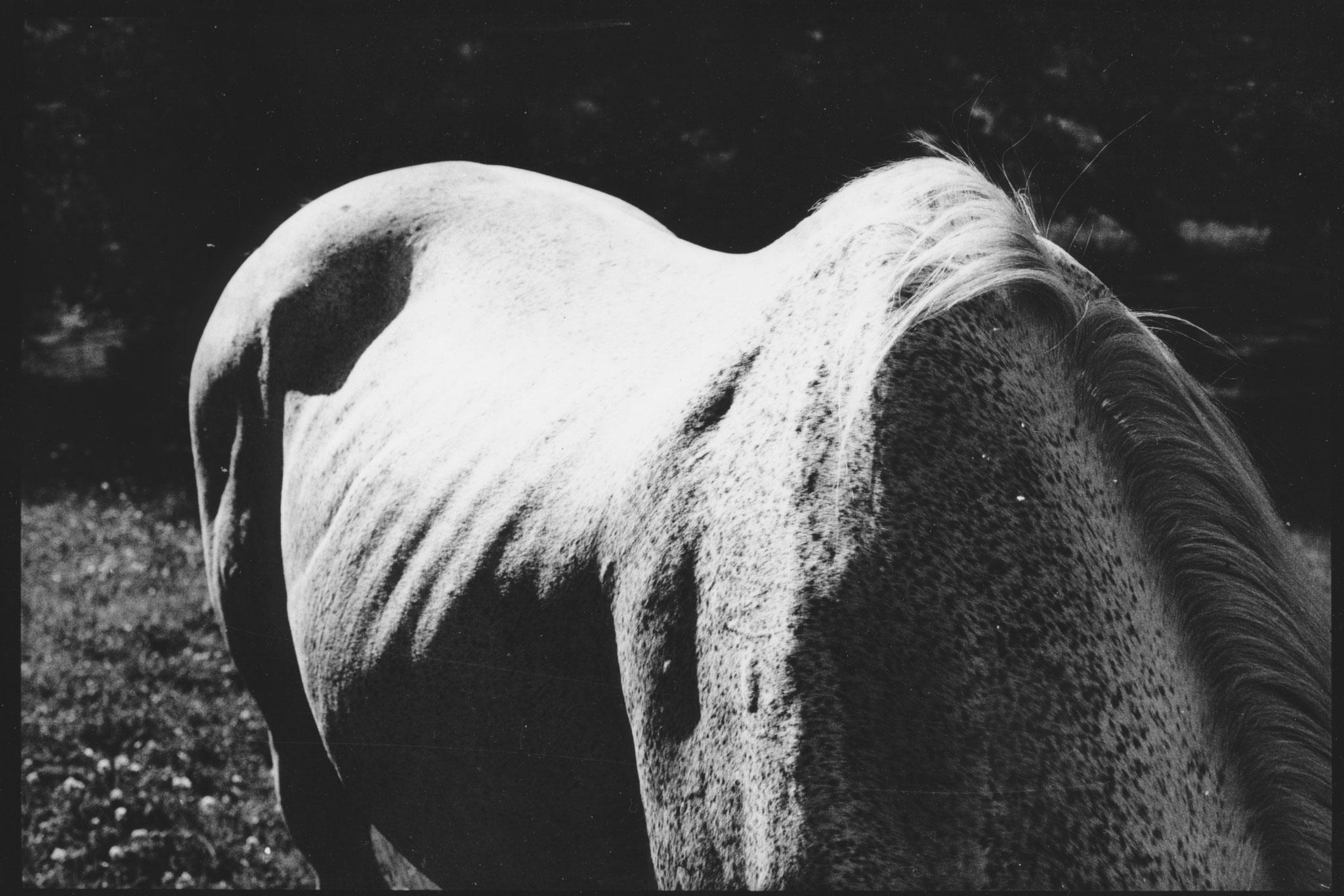 """""""Sid I"""", photographie argentique, 17x24cm Alice Courvoisier"""
