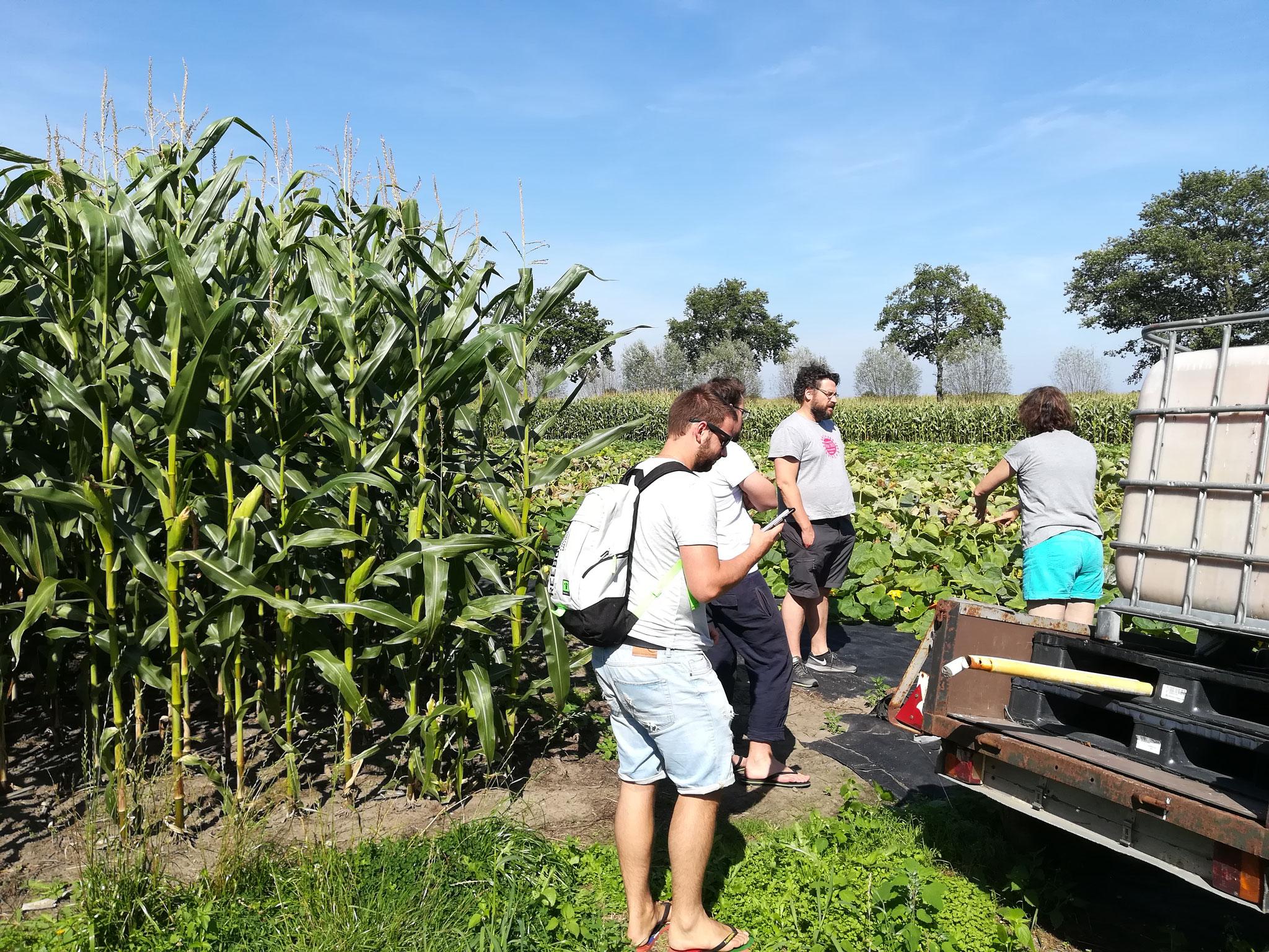 CONVIVIALITE - 2018 - Visite d'une plantation de calebasse en Hollande