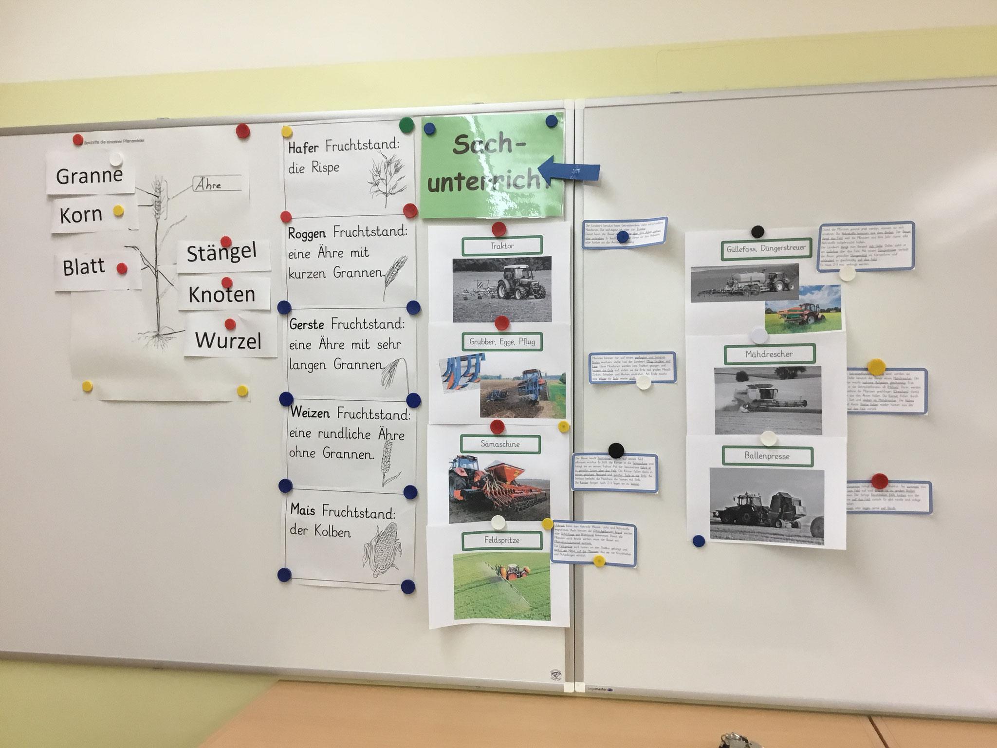 Projektarbeit im Sachunterricht