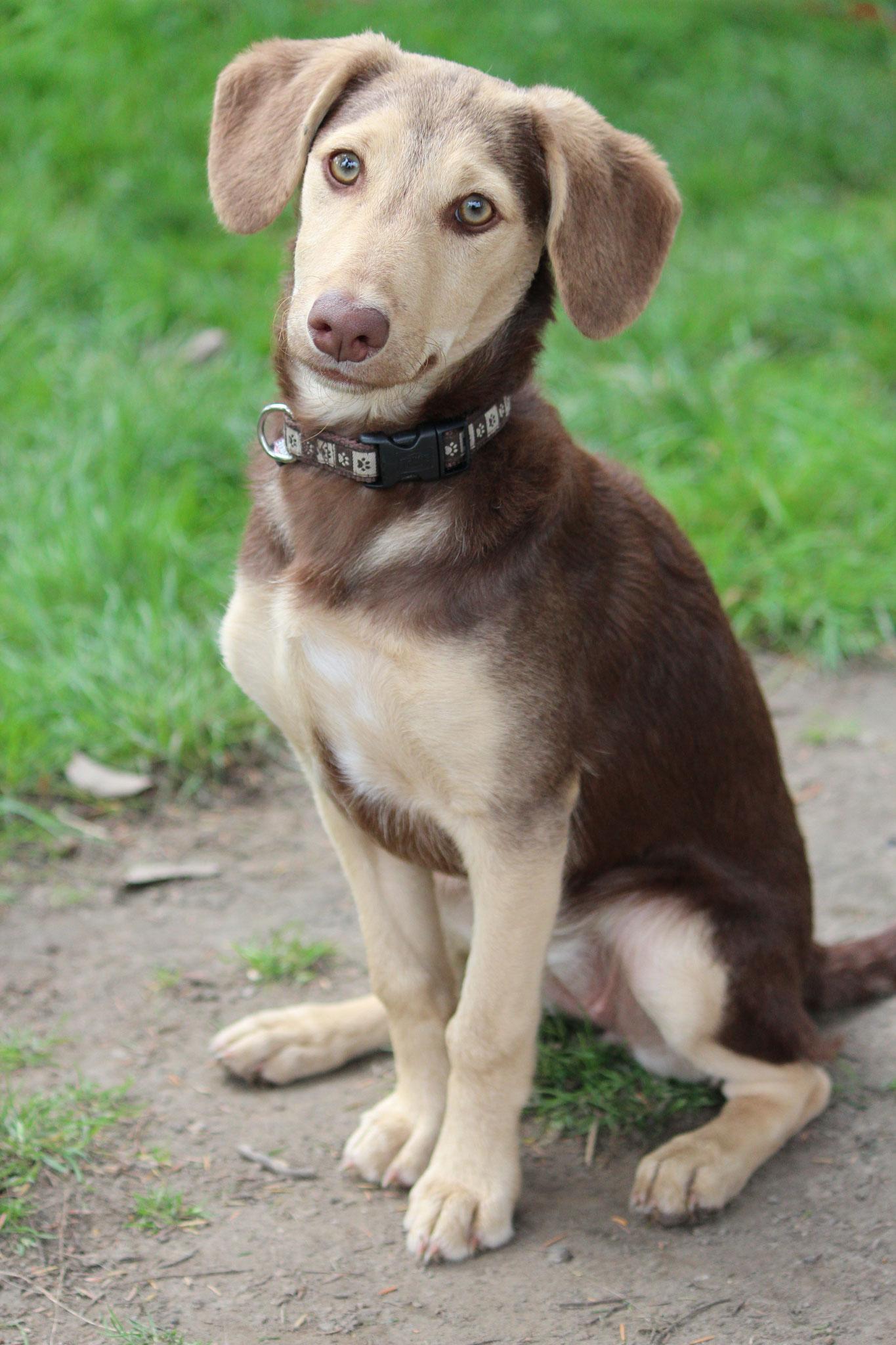 Tilly - Straßenhund, weiblich, geboren 2011 in Thessaloniki, Griechenland