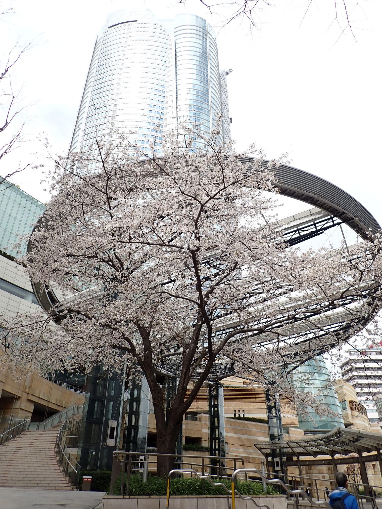 【六本木ヒルズ】森タワーとその手前が「六本木ヒルズアリーナ」の開閉式天井