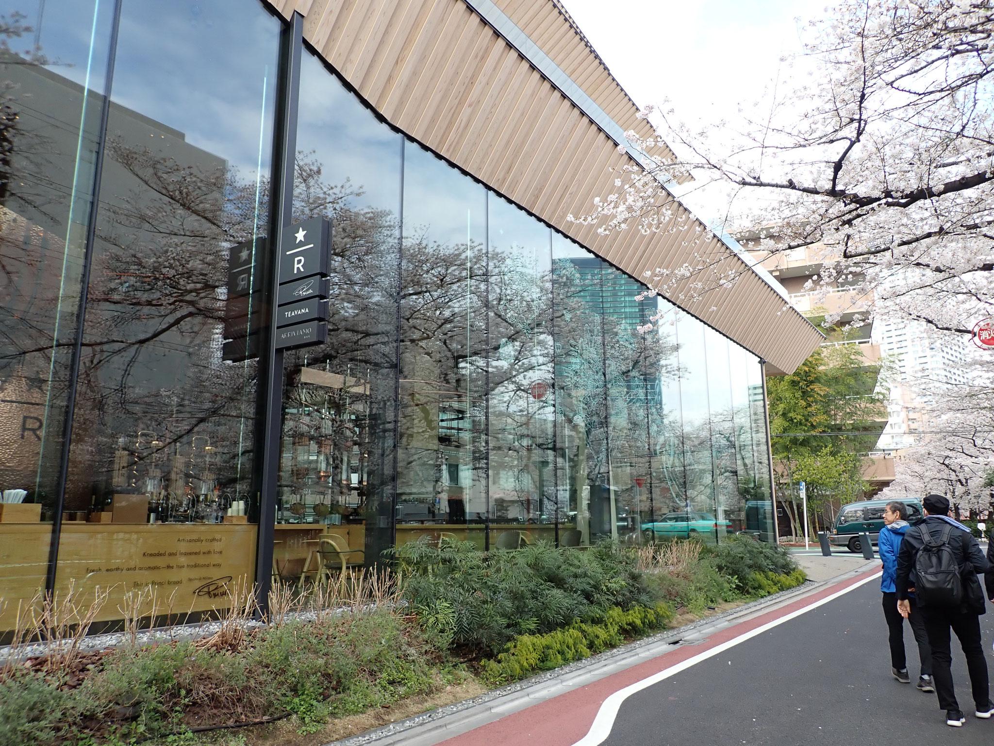 【目黒川南部橋付近スタバ】ガラスの壁面に映った桜。建物は、スタバが世界で5店舗目にここにオープンしたという特別店舗、隈研吾氏とのコラボだそう。