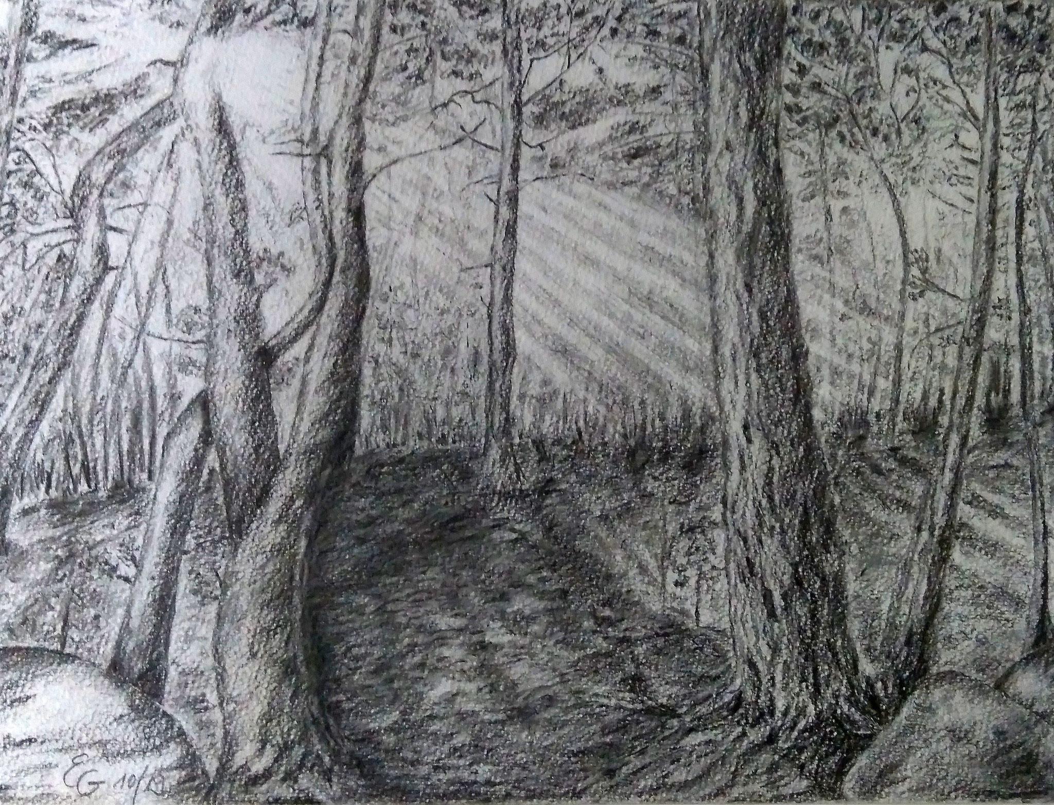 Lichtung, mit Rahmen 50 cm x 70 cm, Bleistift auf Papier