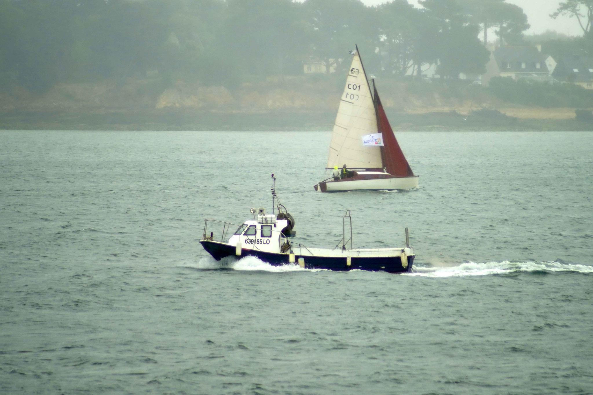 Orca, DSC00997