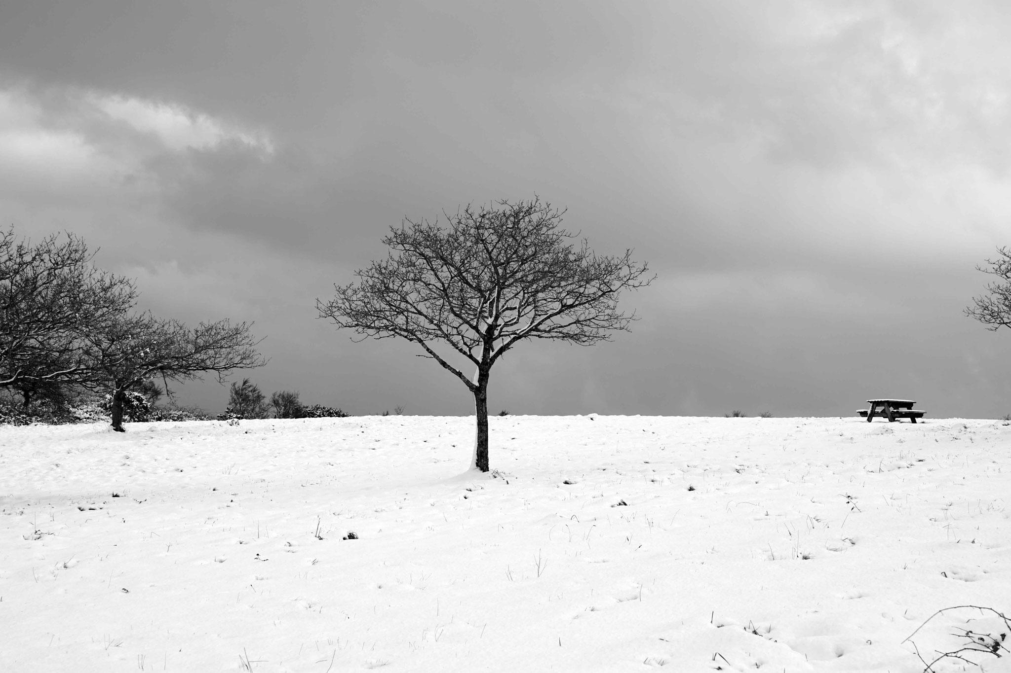 Arbre de Saint Hervé sous la neige, DSC06333