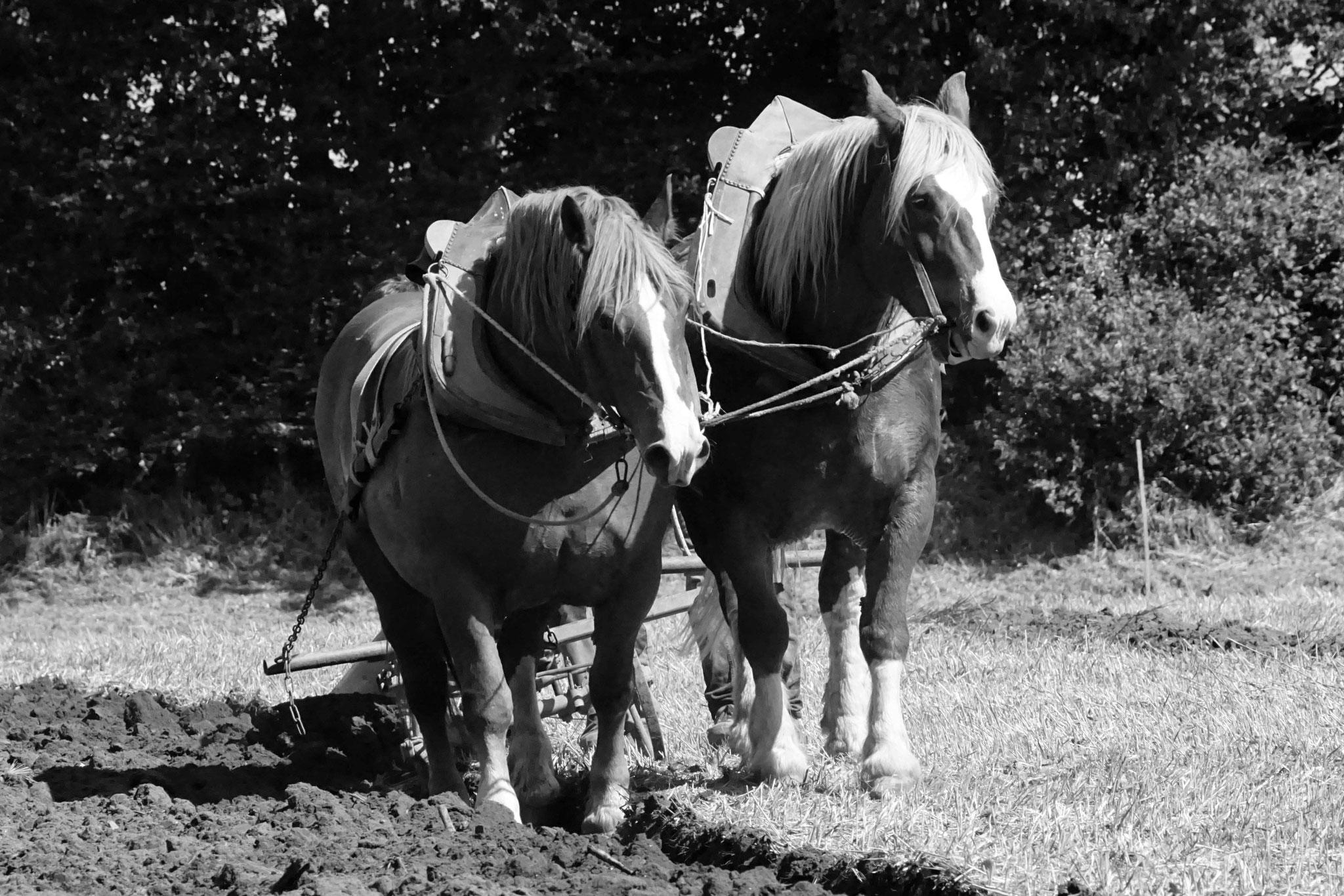 Traits bretons à Plougras, DSC07932