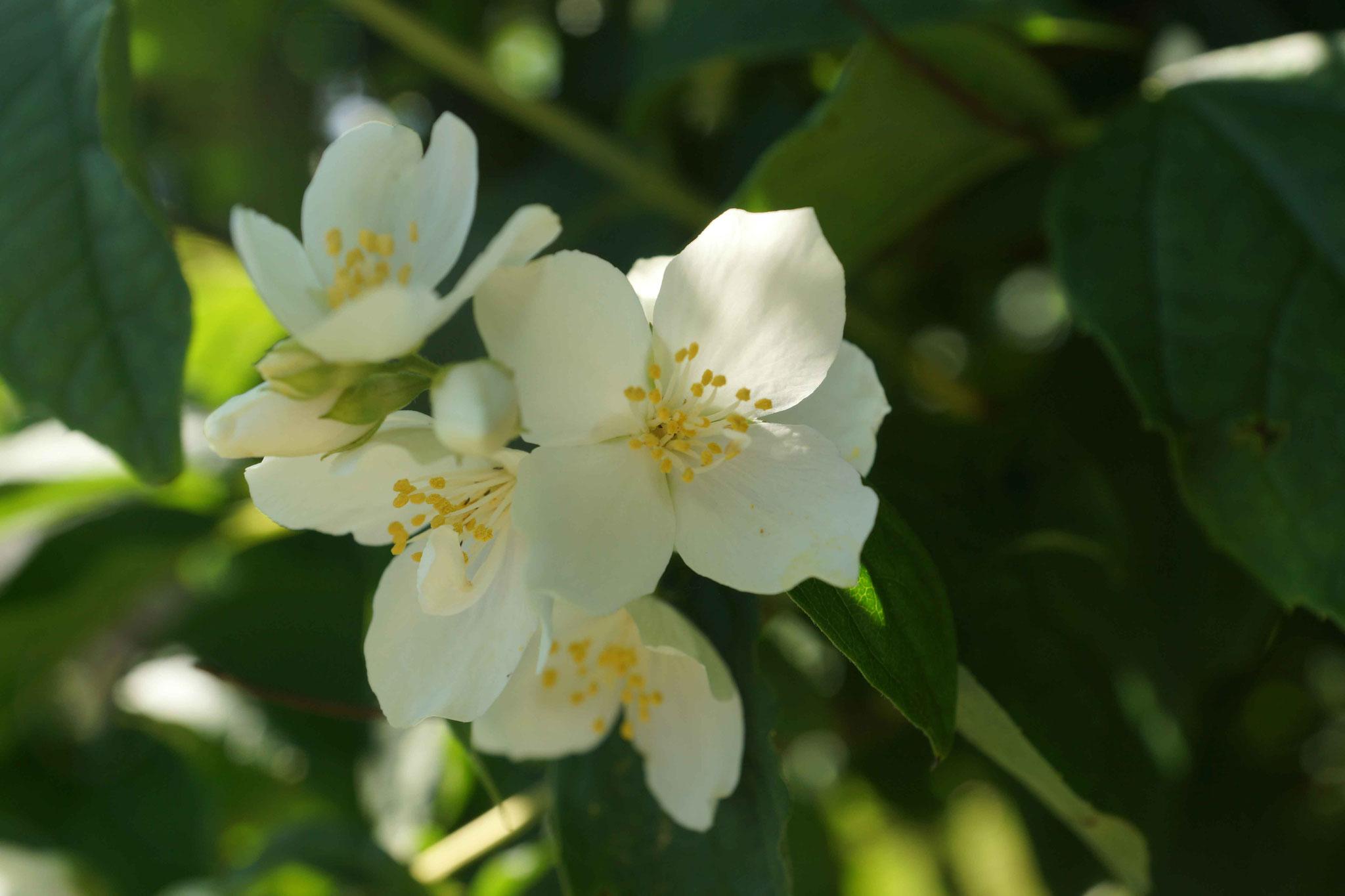 fleurs et blancheurs