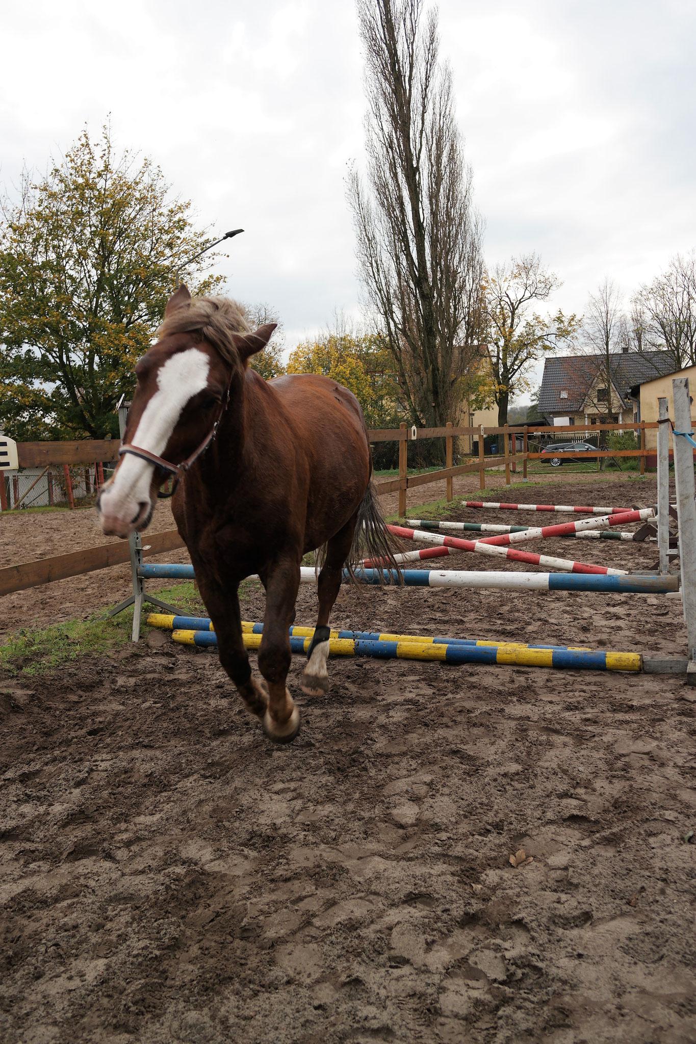 Runde Startnummern Pferdeturnier-Ausr/üstung Trensenzaum
