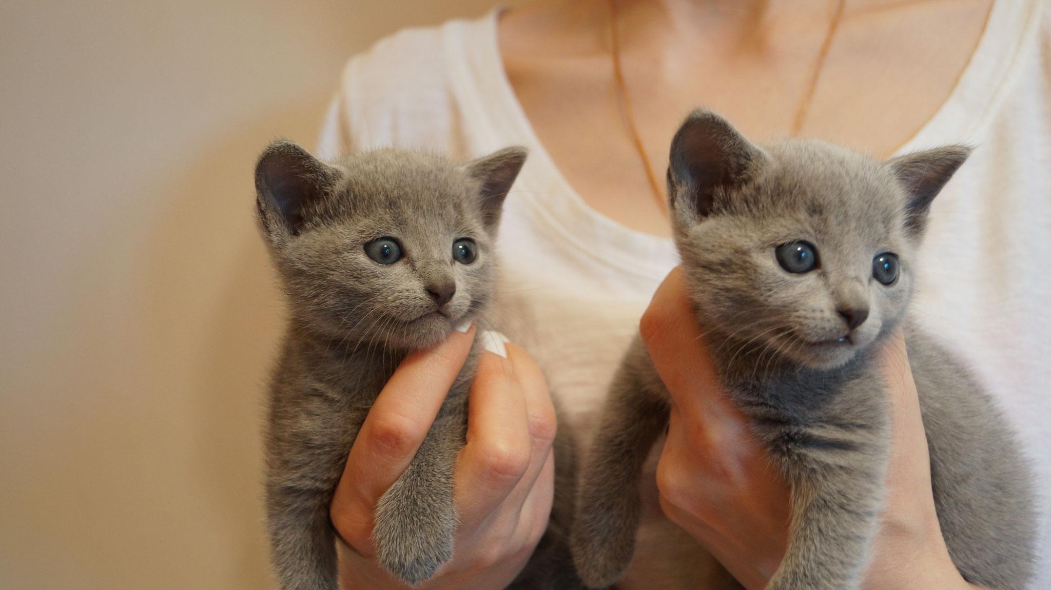 Floyd & Finn