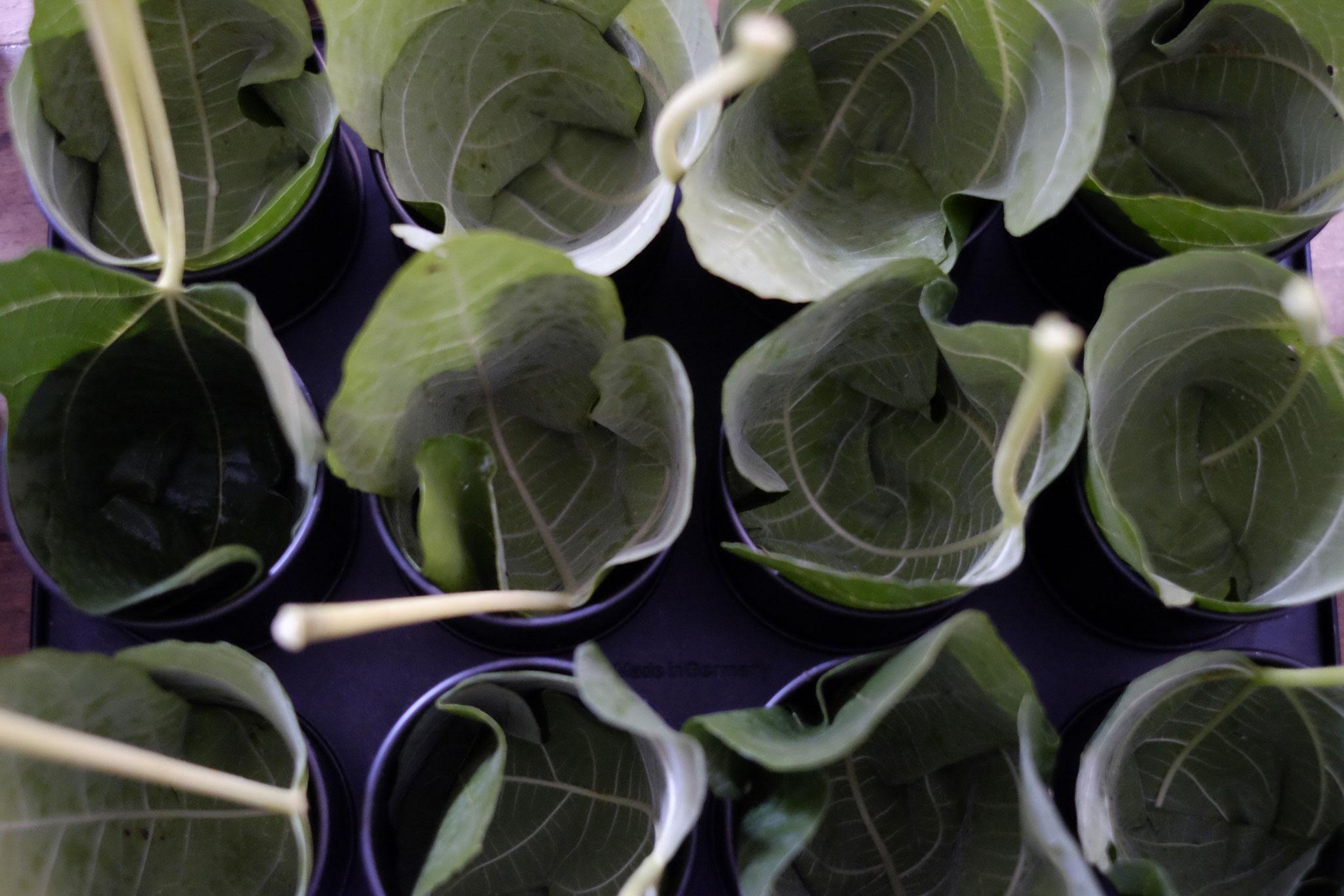 Feigenblätter als zerowaste Alternative zu Papierförmchen