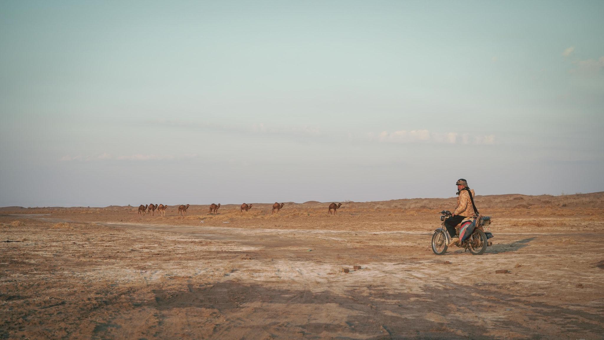 Am Namaksee im Iran, ein Motorradfahrer bewacht seine Kamele