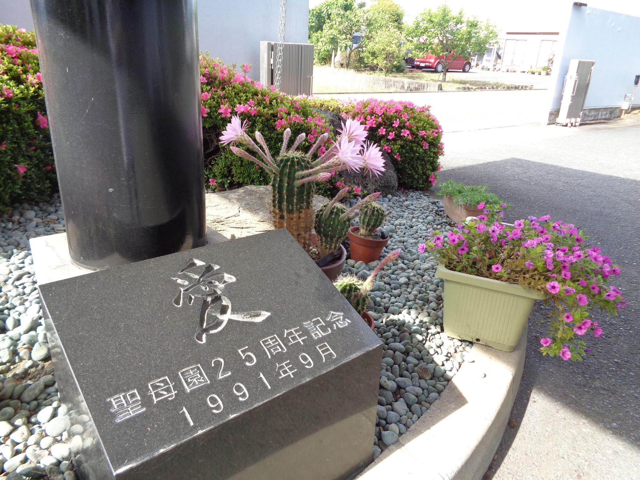 玄関前の記念碑にサボテンの花が寄り添っているようです。