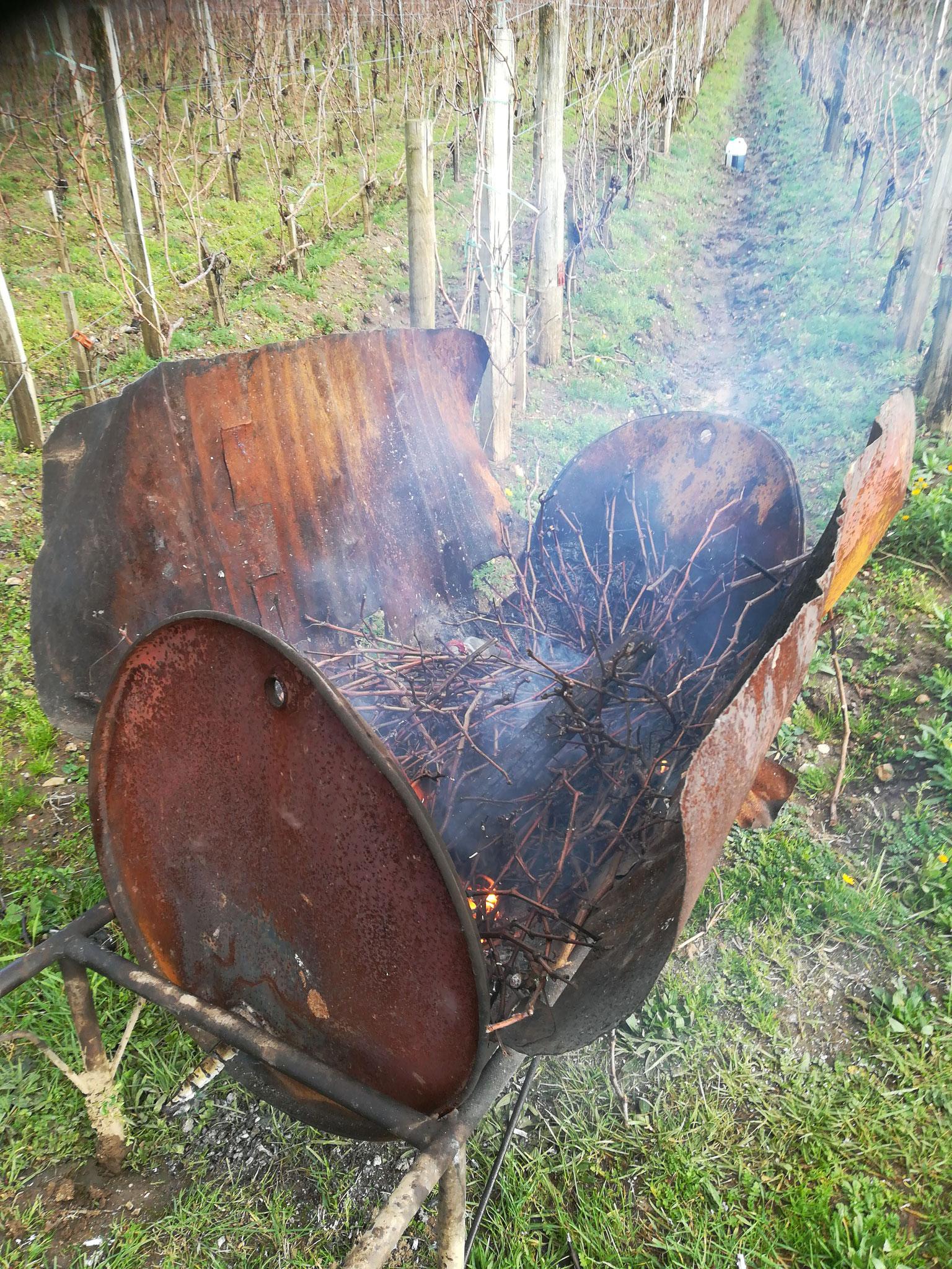 """...ou brûlés dans la""""brouette à feu"""", le brasero des vignes"""