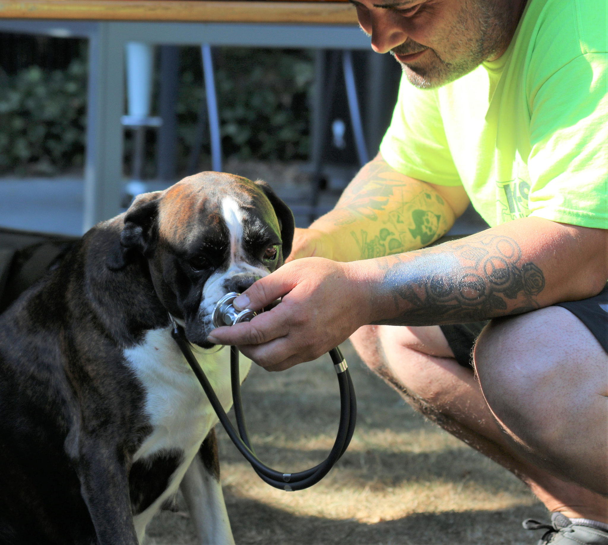 Herzlich Willkommen beim  1. Hilfe Kurs für Hunde