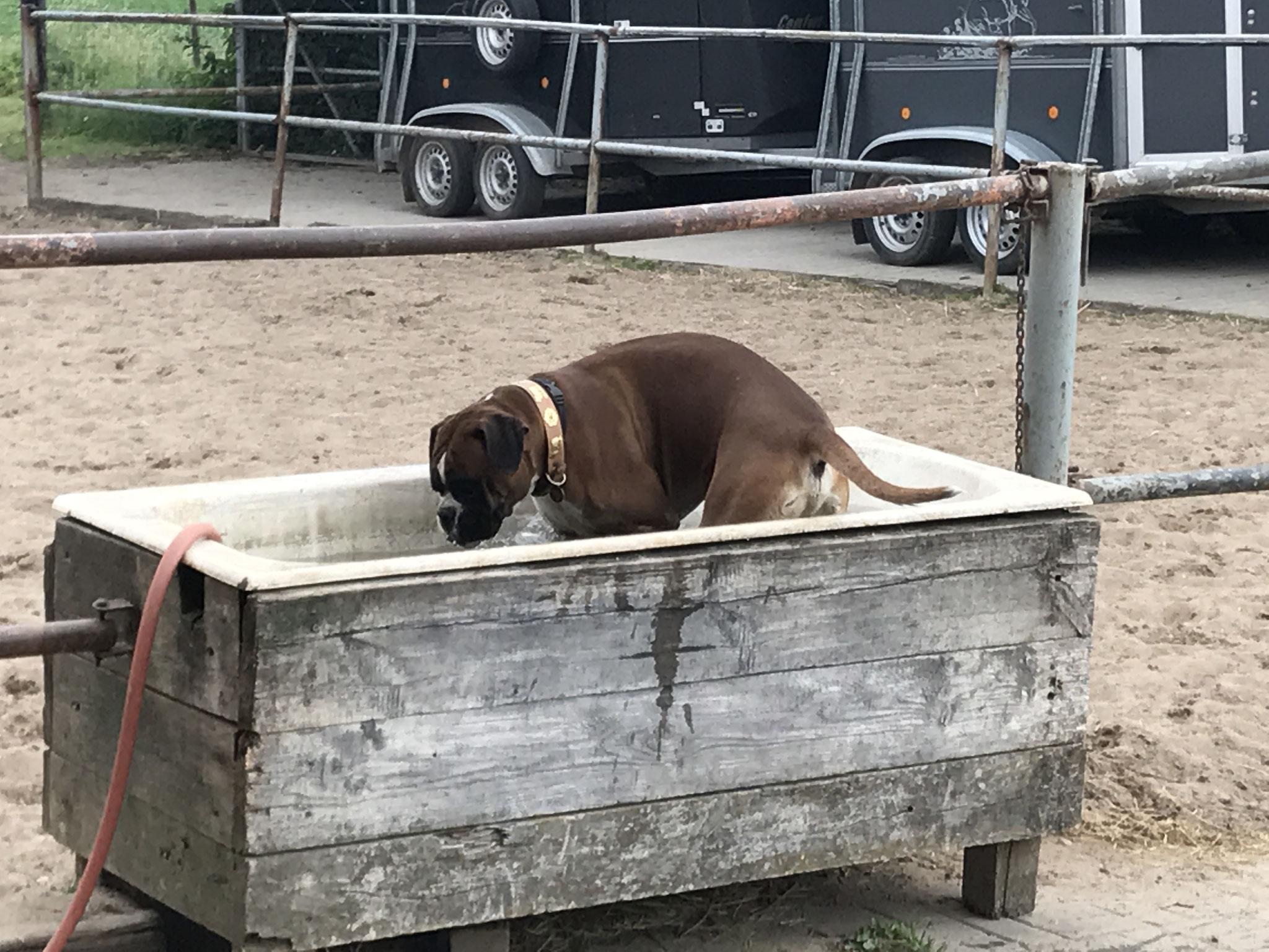 Artur in der Pferdetränke