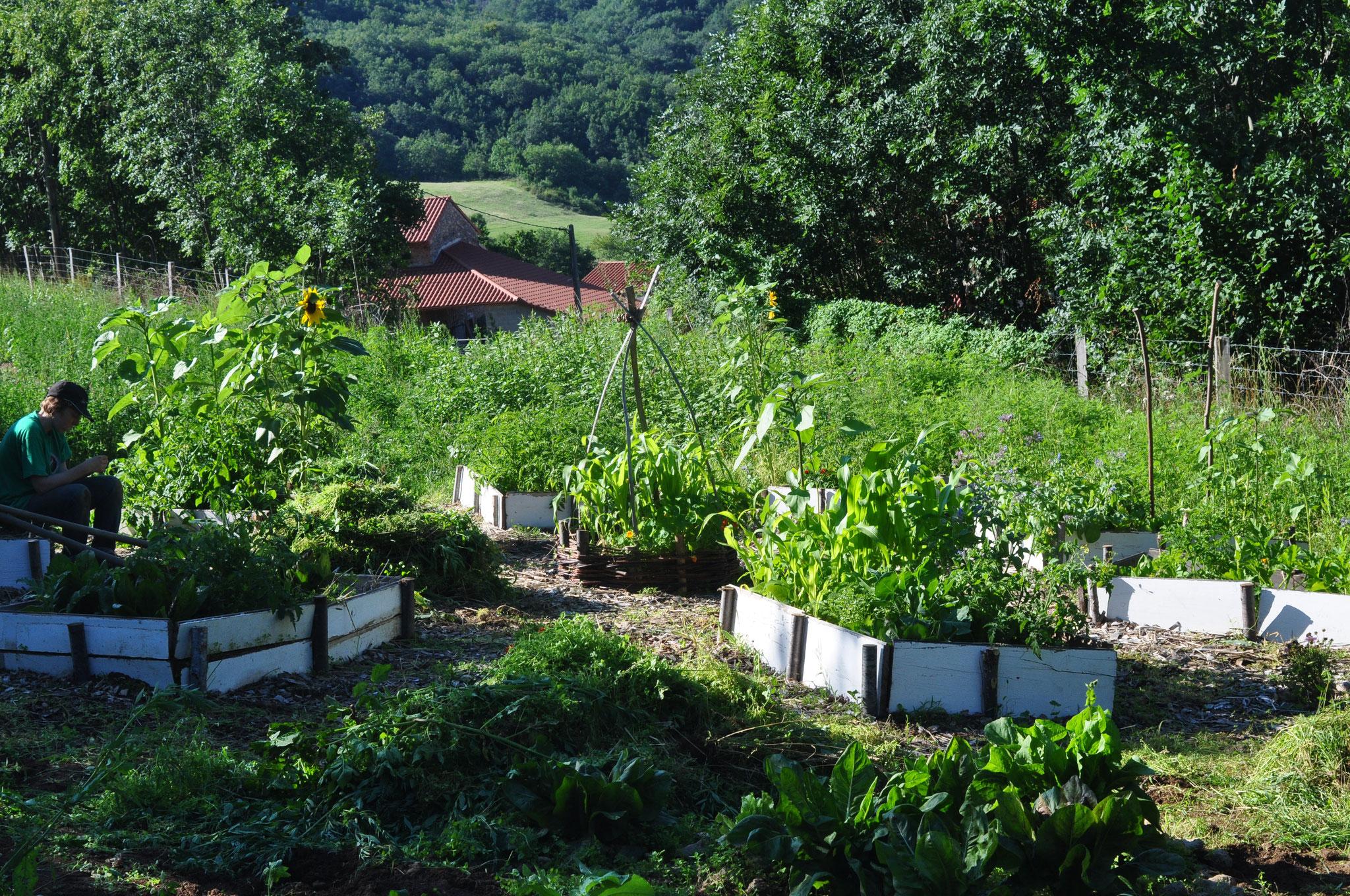 jardins potagers naturels , association avec des fleurs, désherbage paillage...