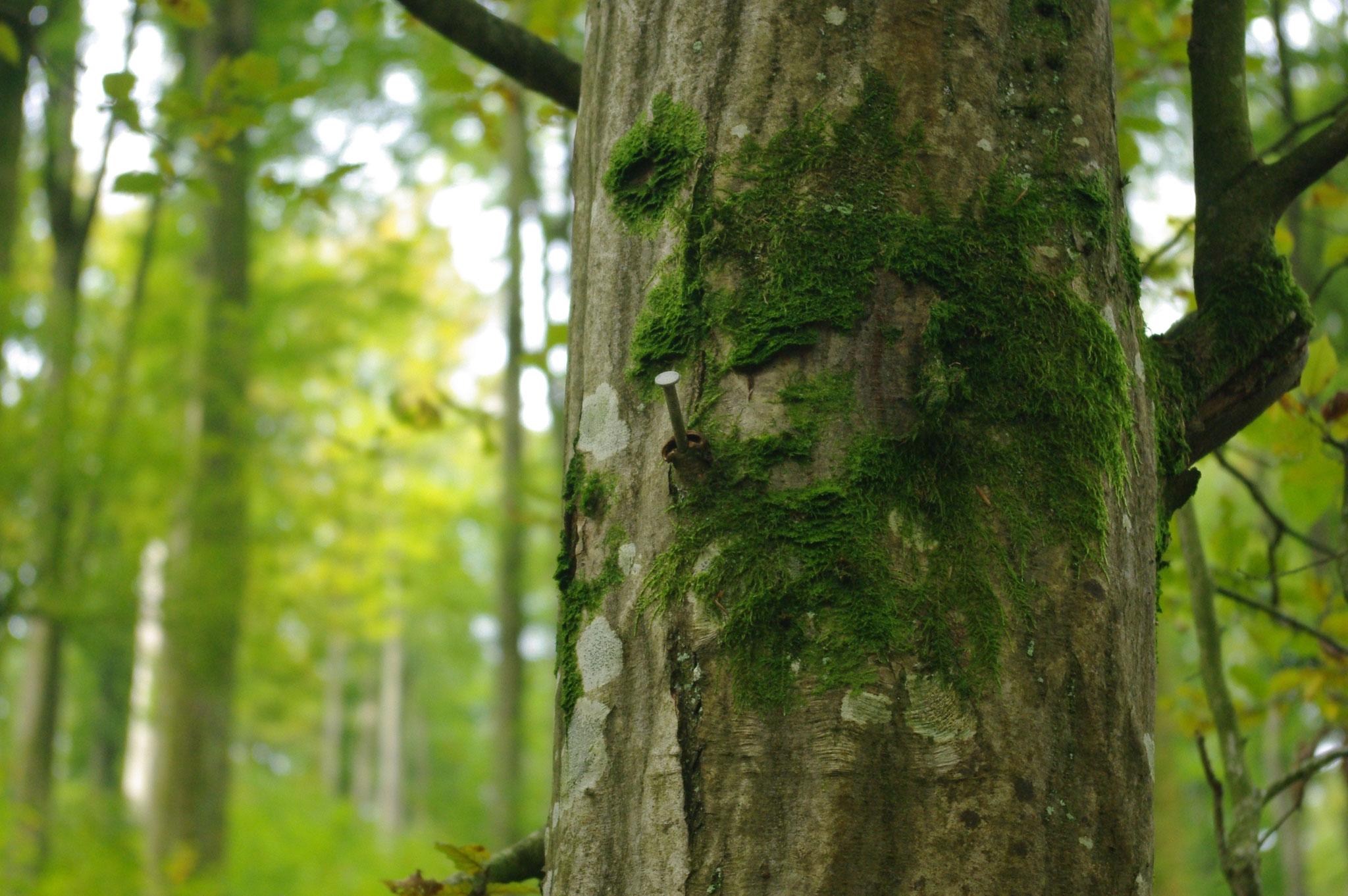 """Ein Baum """"frisst"""" den Nagel."""