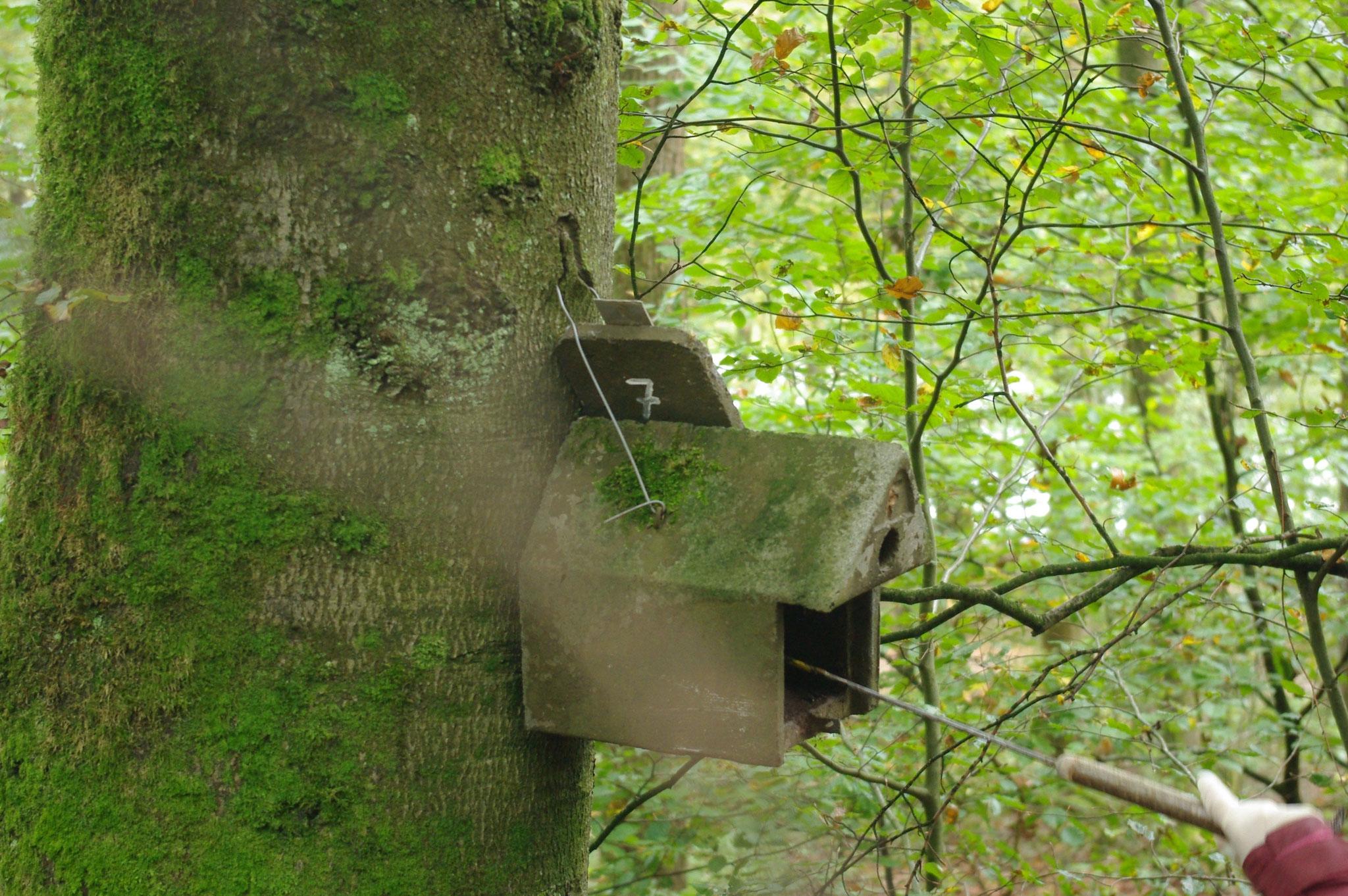 """Hier ist ein Baum so breit geworden, dass unsere Aufhängung """"aufgefressen"""" wird."""