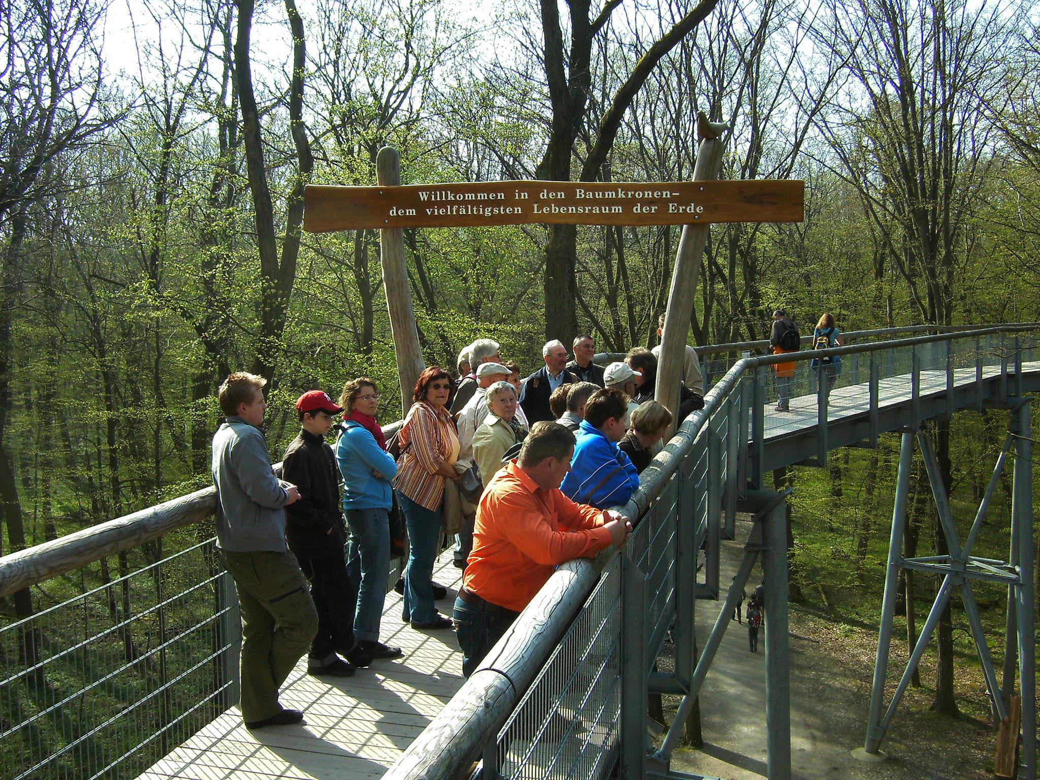 Vereinsausflug 2008 zum Baumkronenpfad im Nationalpark Hainich (Foto: Lothar Ruppel)