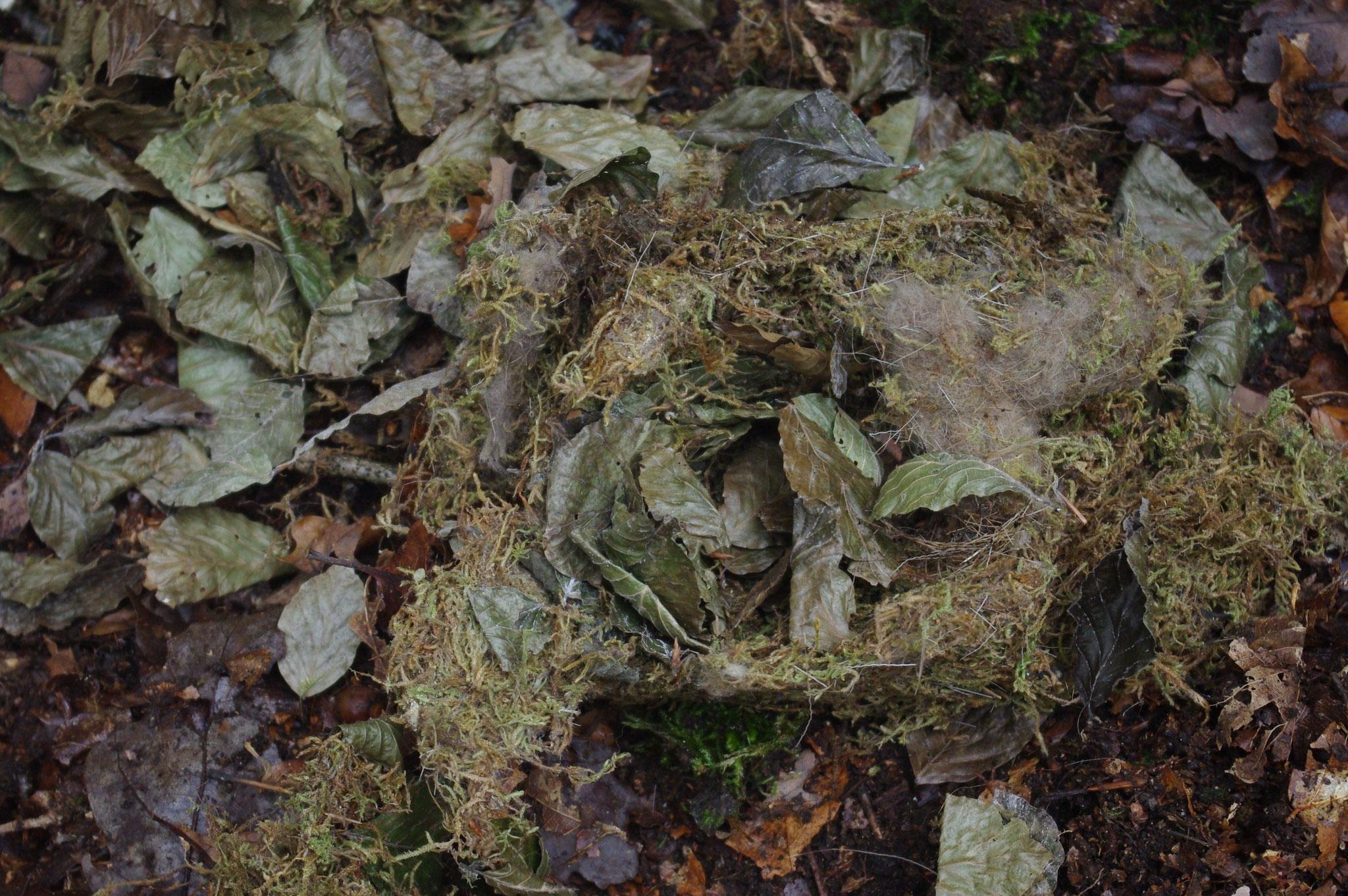 Nest eines Siebenschläfers