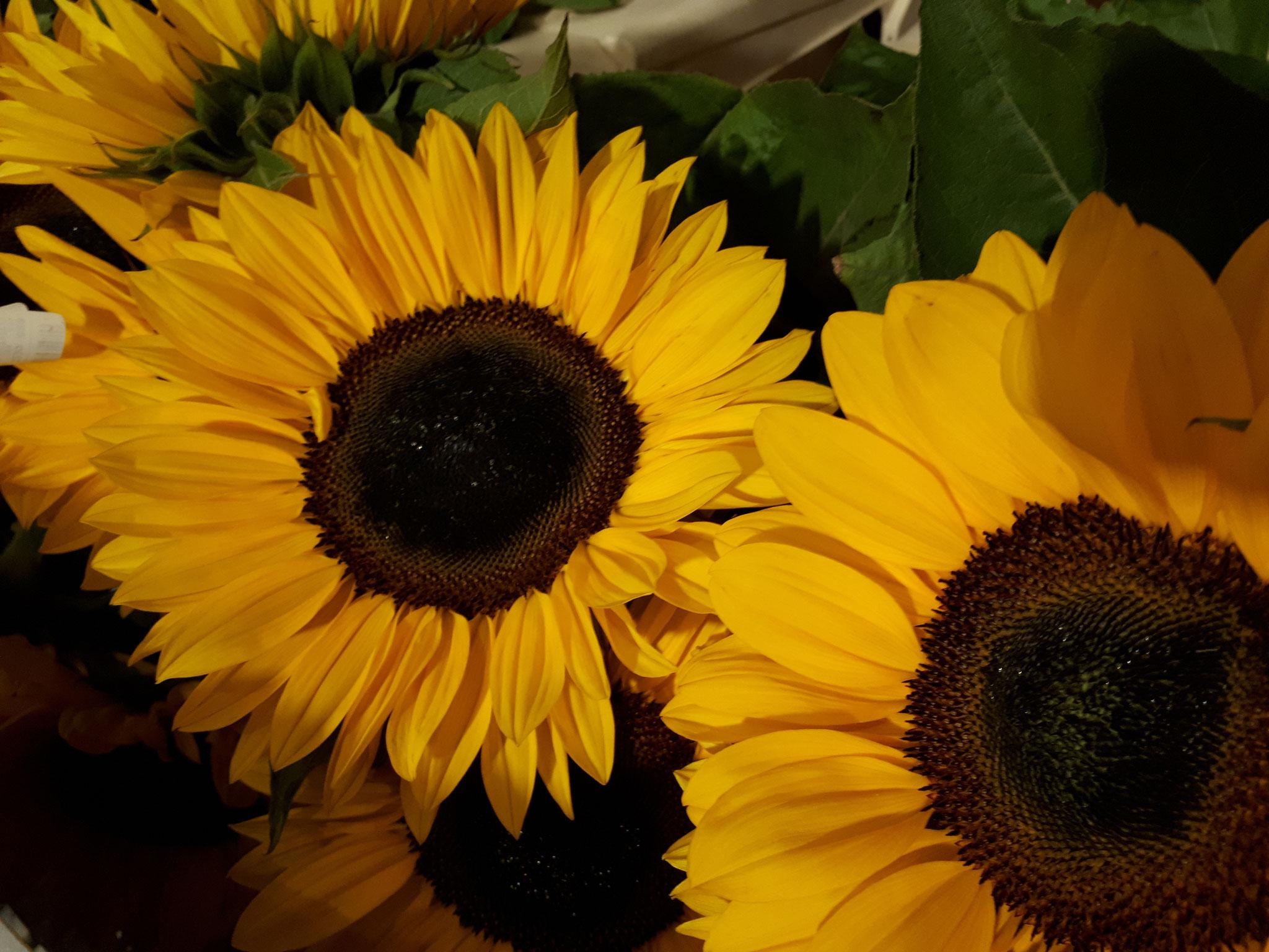 Fleurs de tournesol ,livraison de fleurs a Arcachon