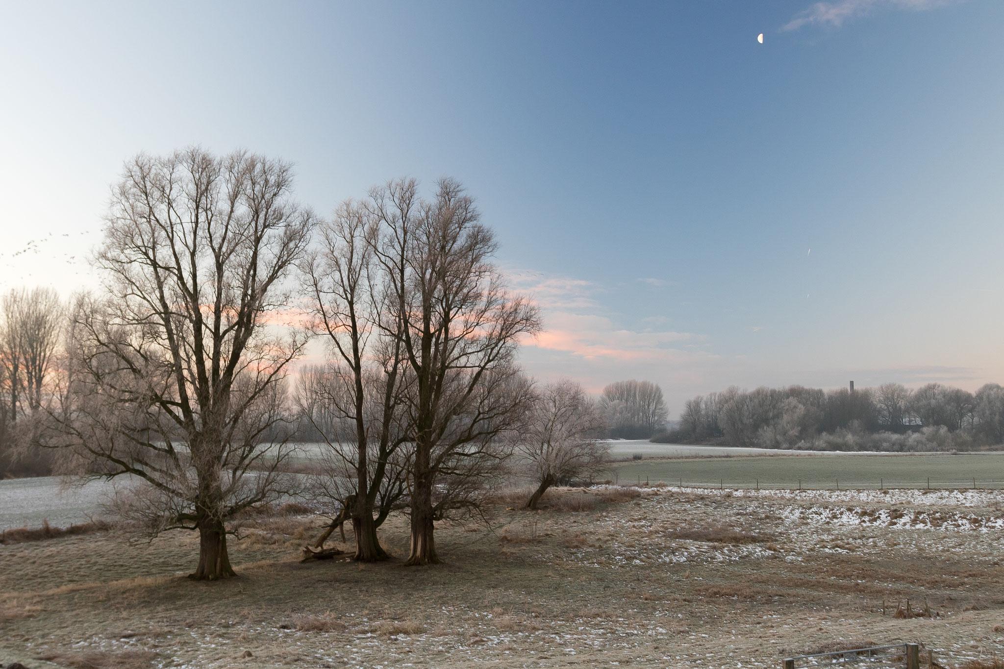 wintermorgen uiterwaarden bij de Lek