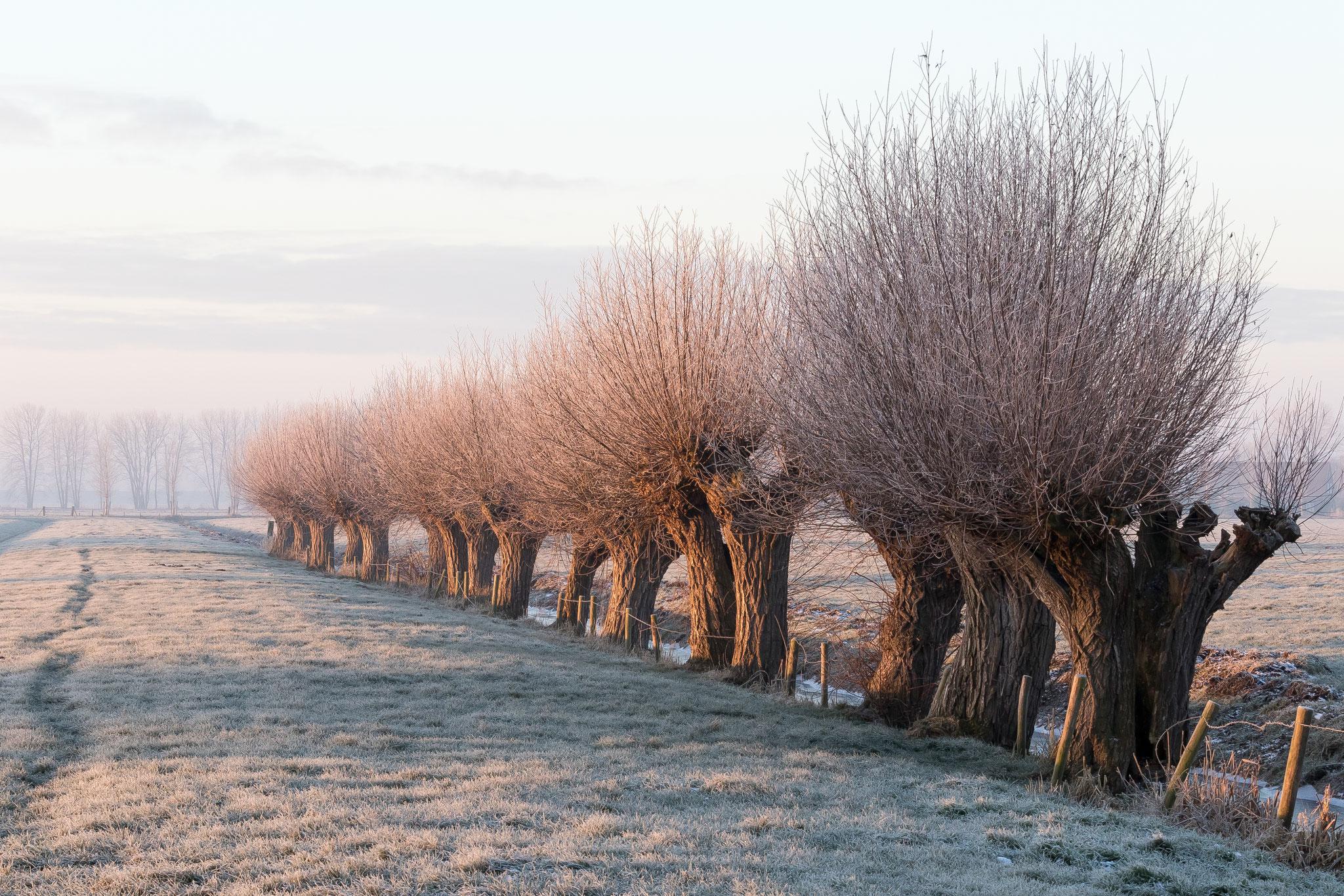 Langbroekerwetering wintermorgen