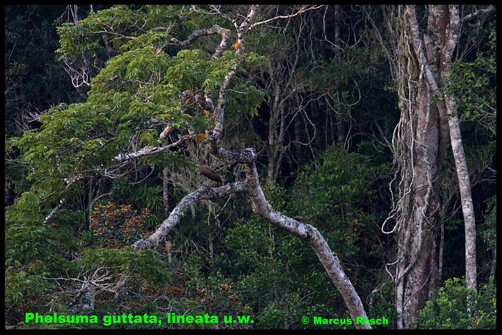 Schattig, hohe Luftfeuchtigkeit, dichten Pflanzenwuchs - (Madagaskar)