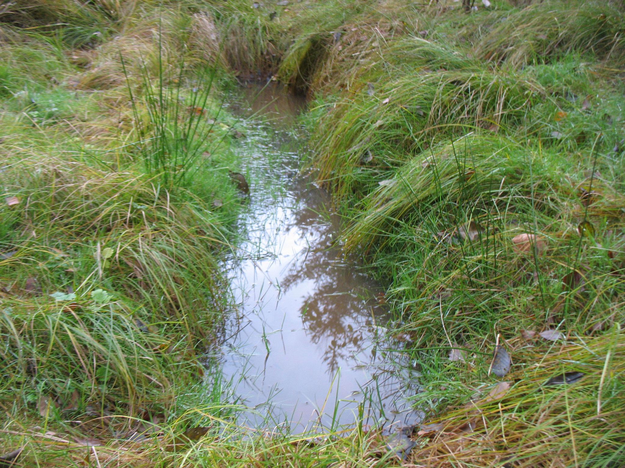 Noch im selben Jahr kaum mehr von einem natürlichen Biotop zu unterscheiden