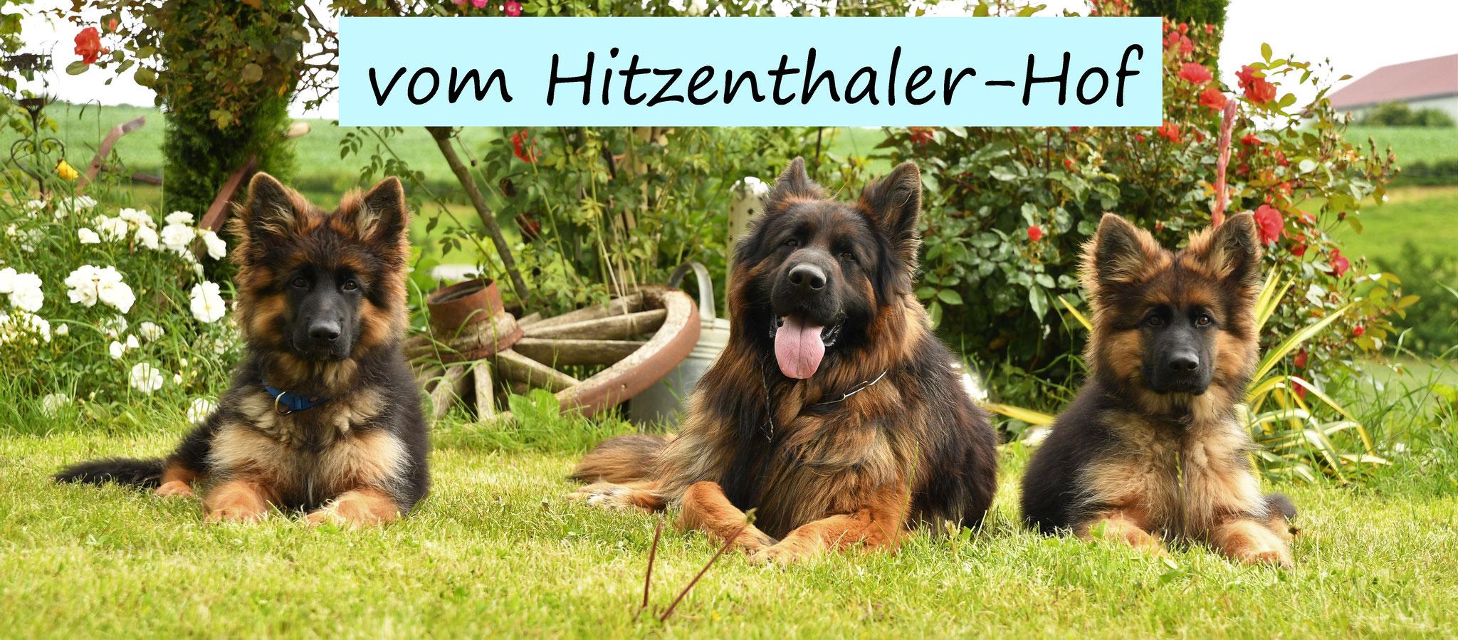 Nachkommen Altdeutscher Schaferhund Langstockhaar Schaferhund Bayern Zuchter Zucht