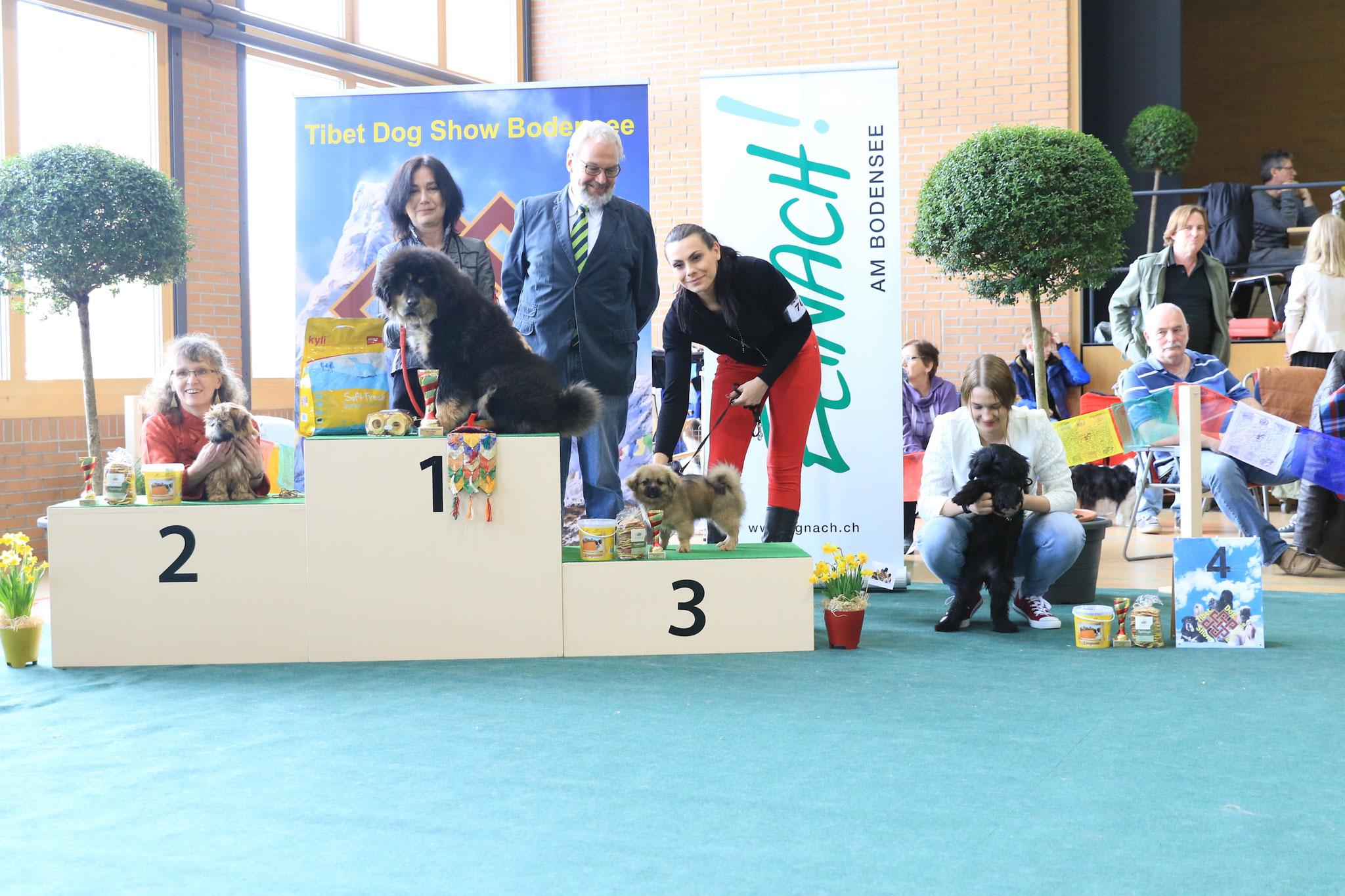 Bumo gewinnt im Ehrenring den 4.Platz bei den Welpen aller Rassen