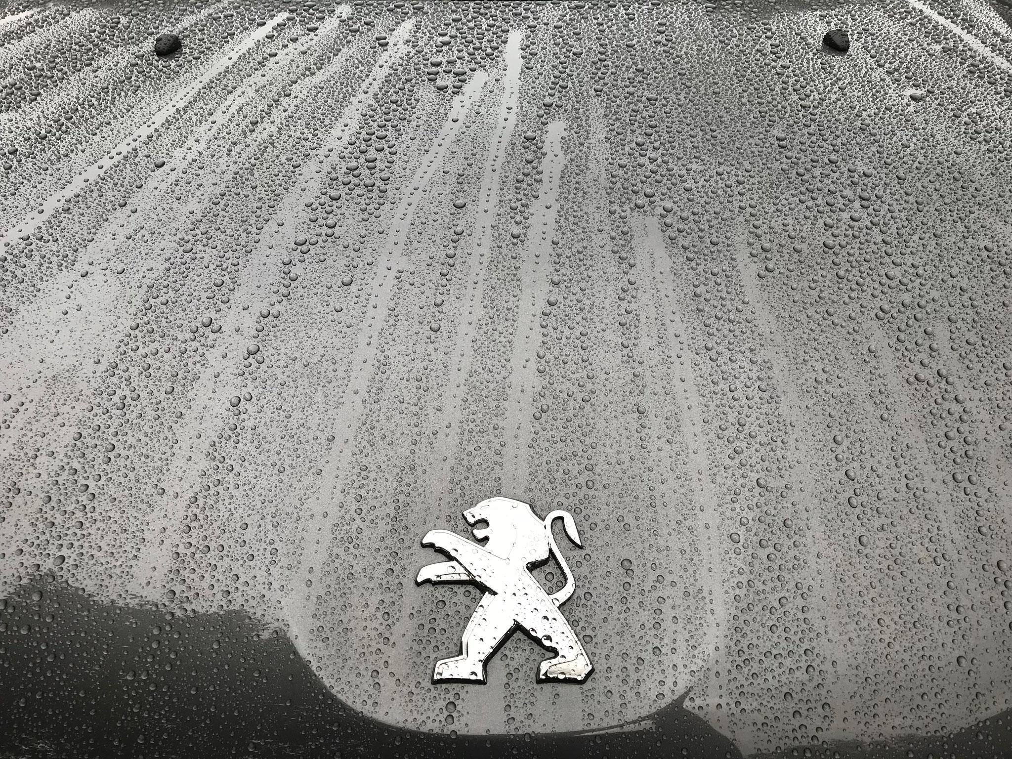 Peugeot 2008sw Beschermd door Drexler Body Coating.