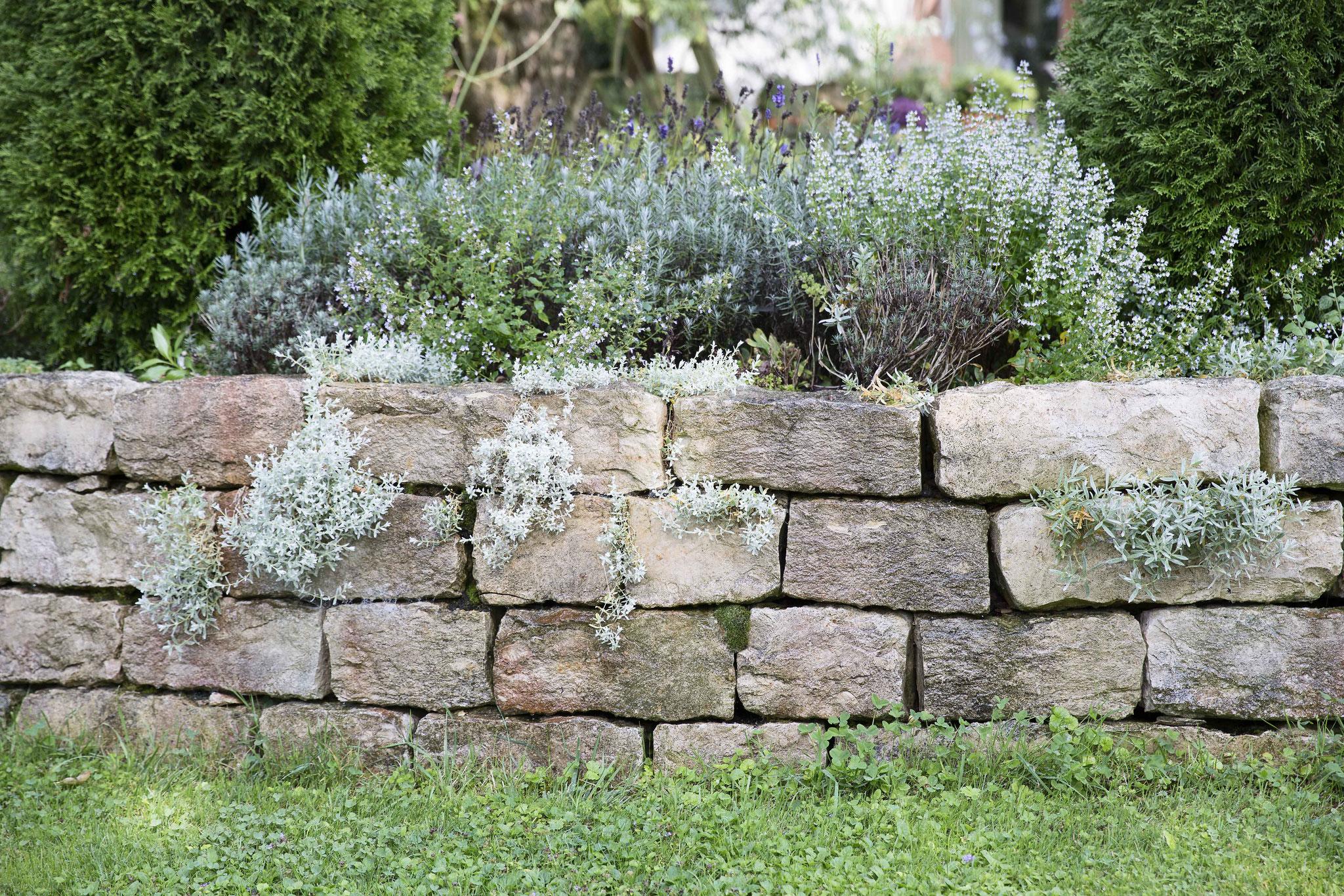Bepflanzung Voegtli Gartenbau Ihr Partner für Ihren Traumgarten