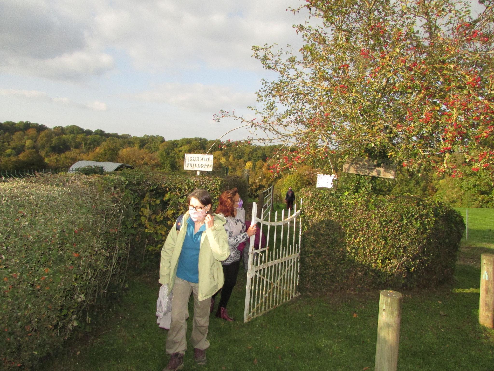 Sortie Plantes et Baies d'Automne octobre 2020