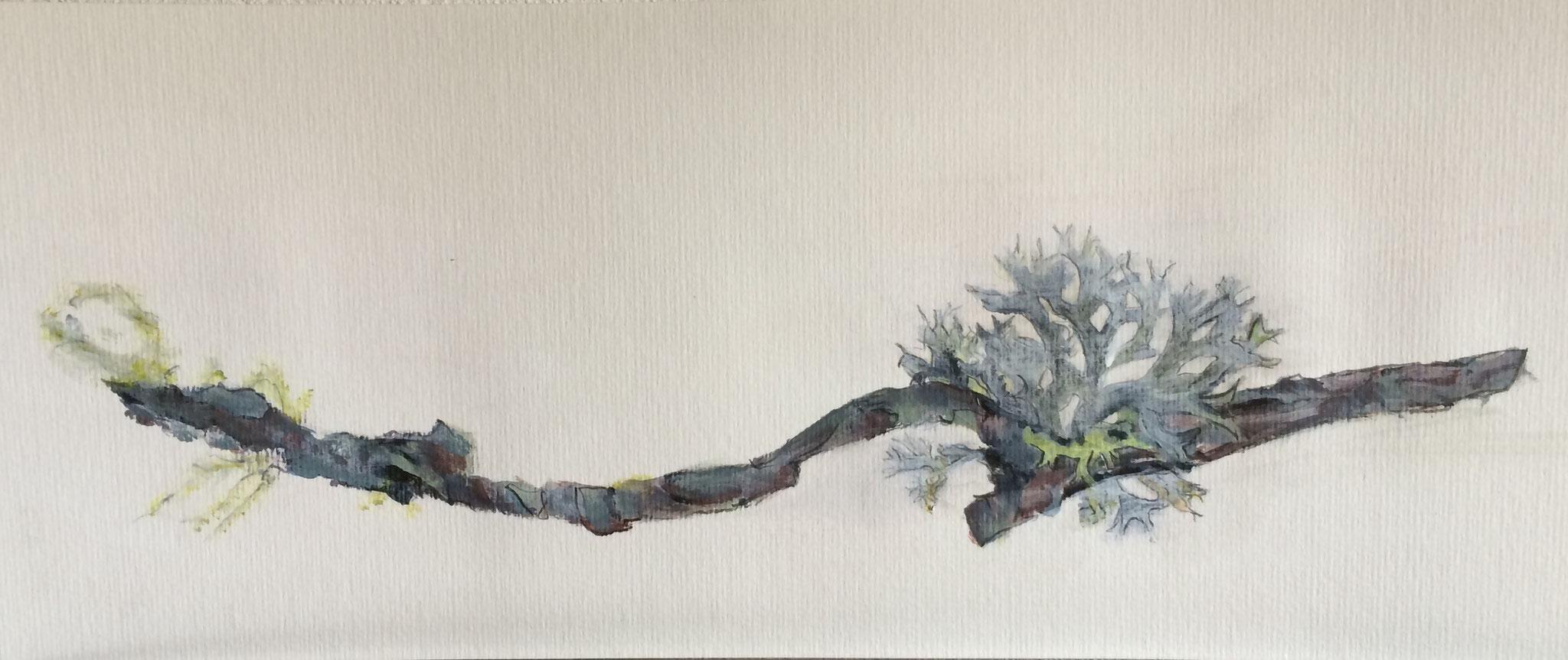 Waldkoralle, 50cm x 20cm, Acryl auf Papier, 2016, verkauft