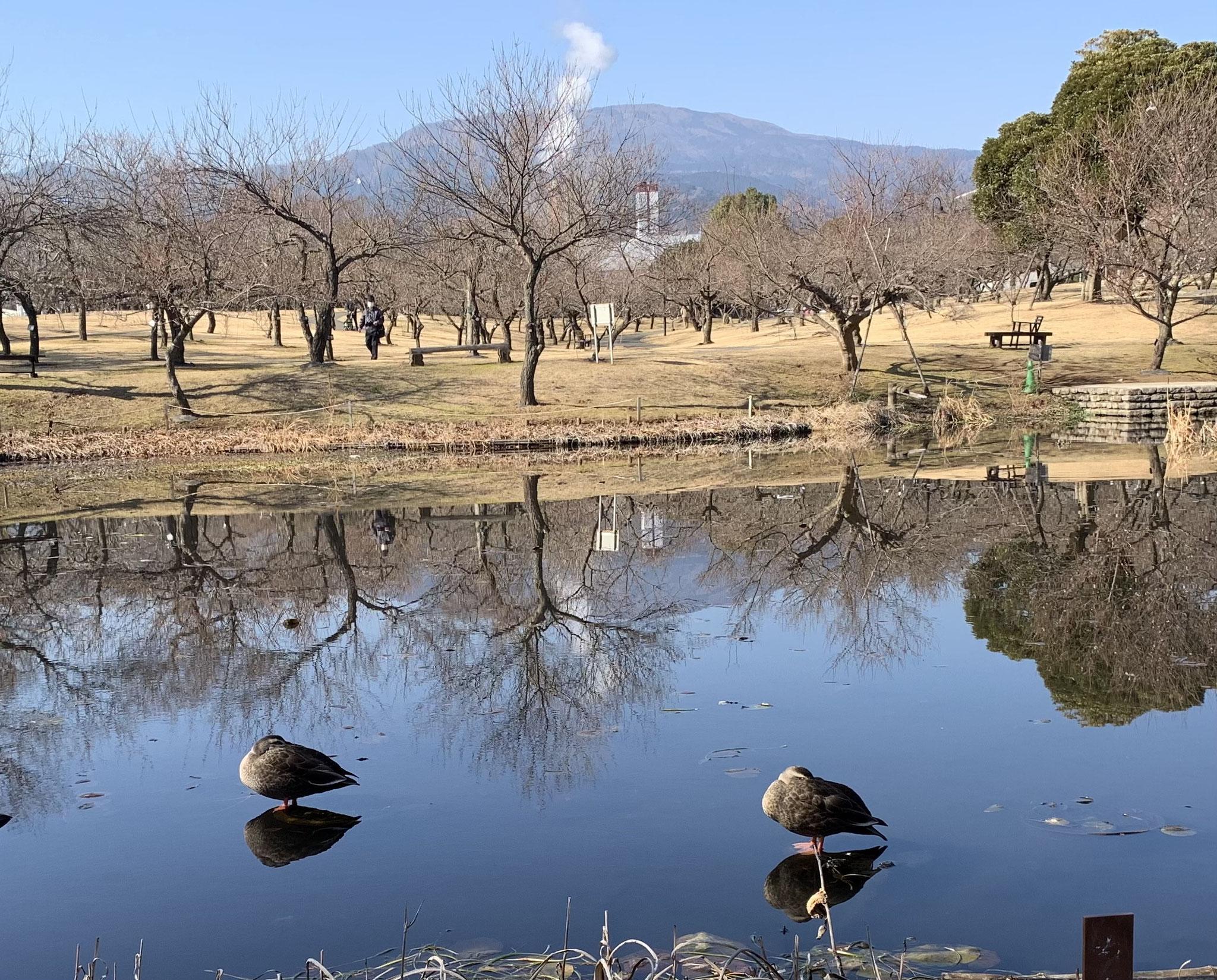 Photograph taken by Noriko Kimura