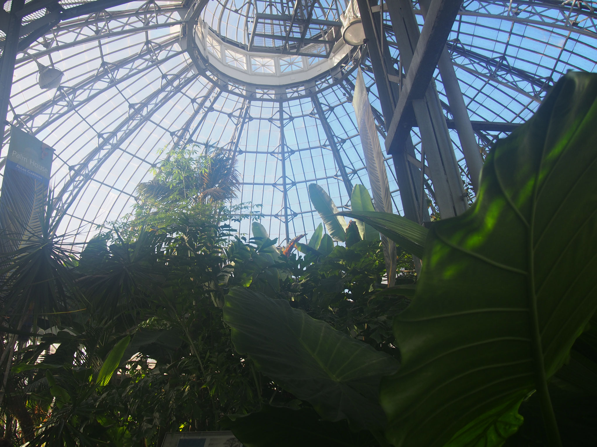 Photo of Allan Gardens Conservatory built in 1858 taken by SAE KIMURA