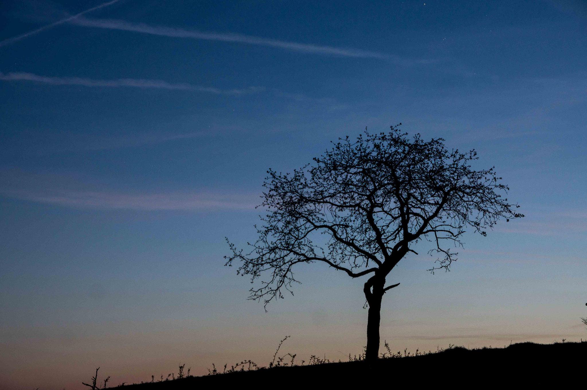 Baum Shilouette; Breitenstein