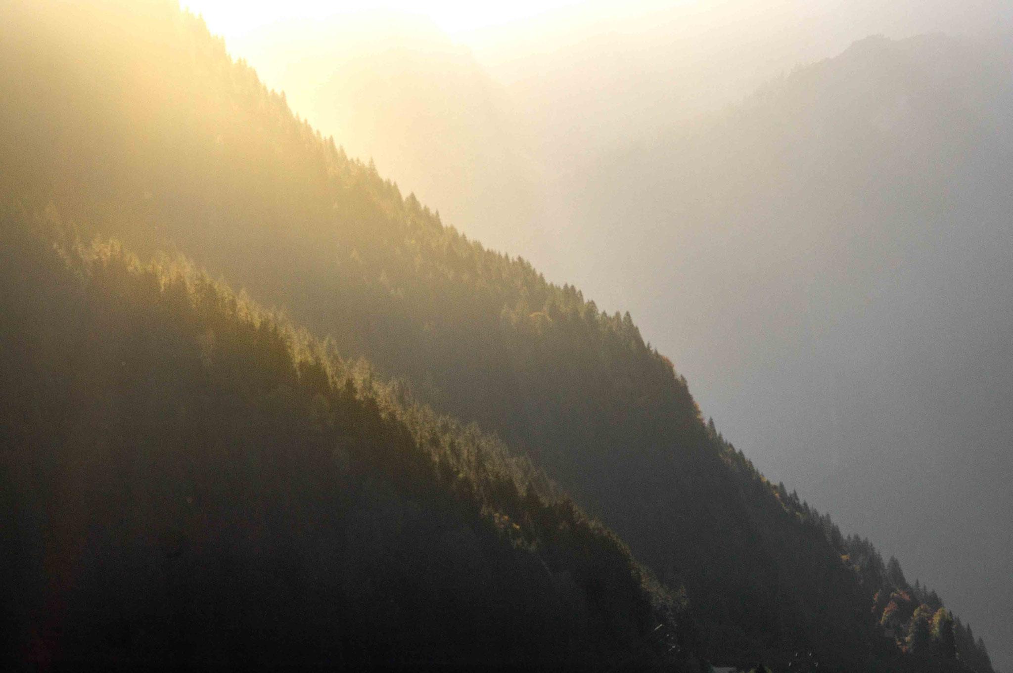 Tannenwald im Sonnenschein; Montafon