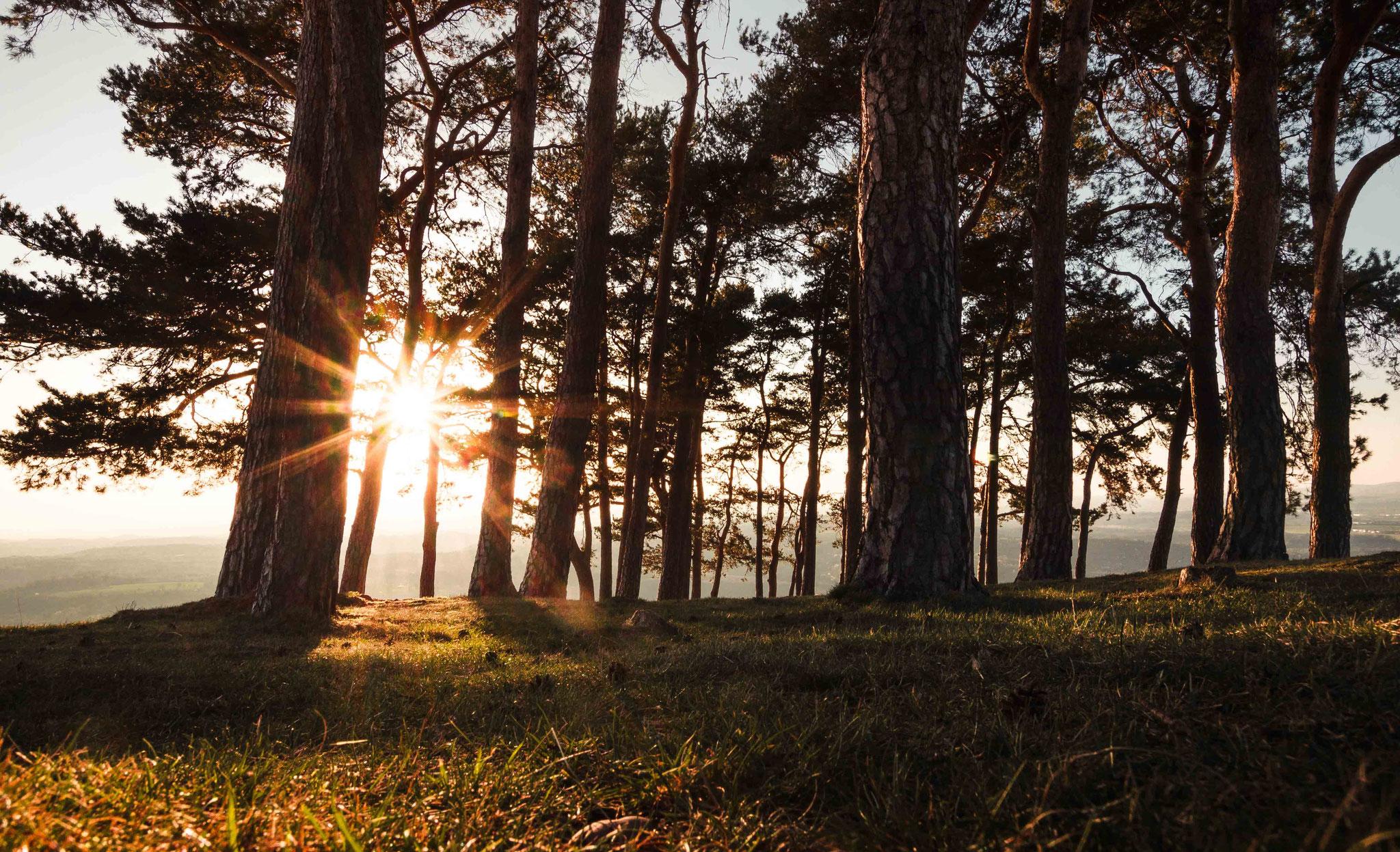 Sonnen durchfluteter Wald; Hohen Bohl