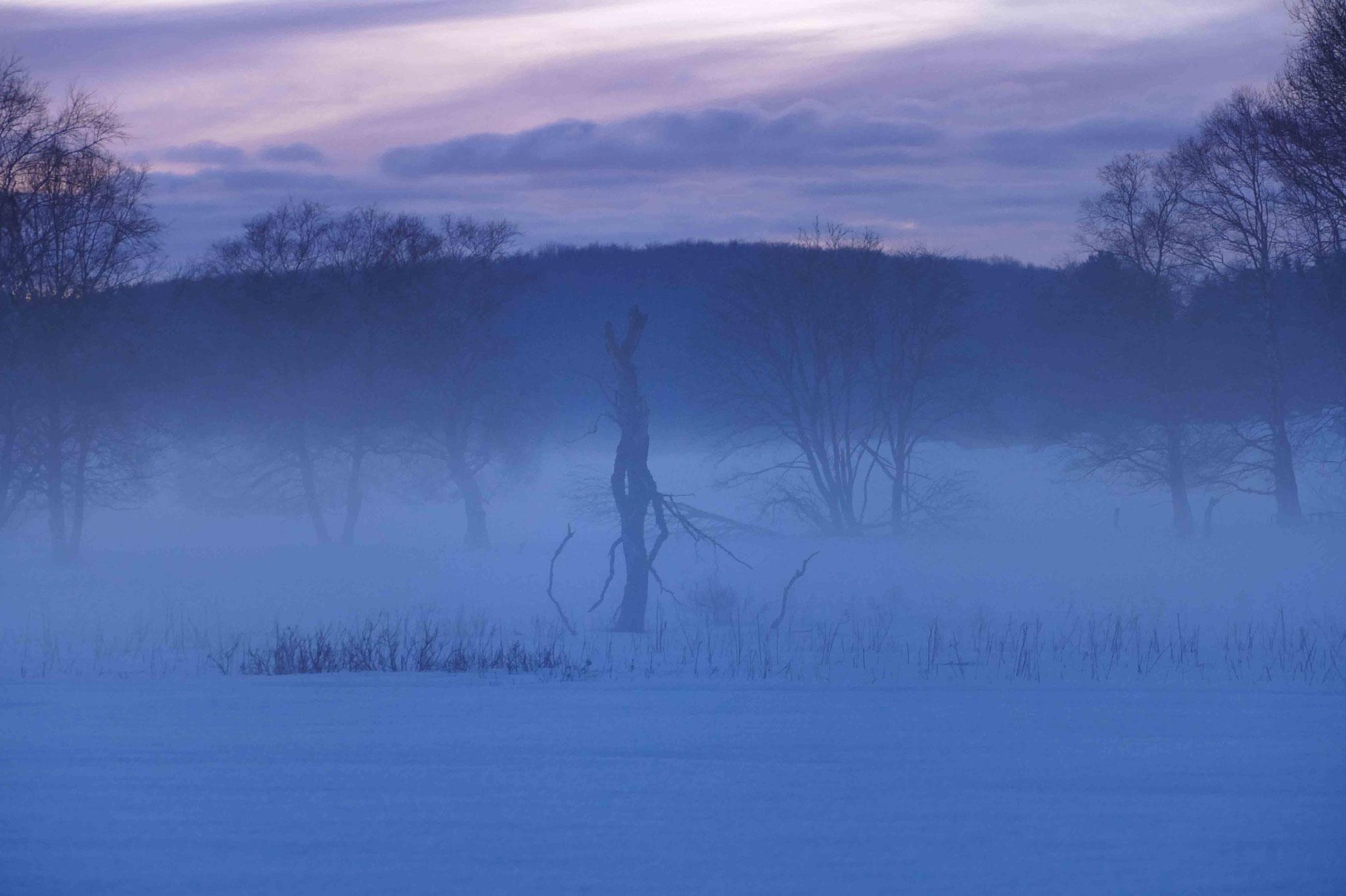 Mystische Moor Landschaft; Schopflocher Moor im Winter