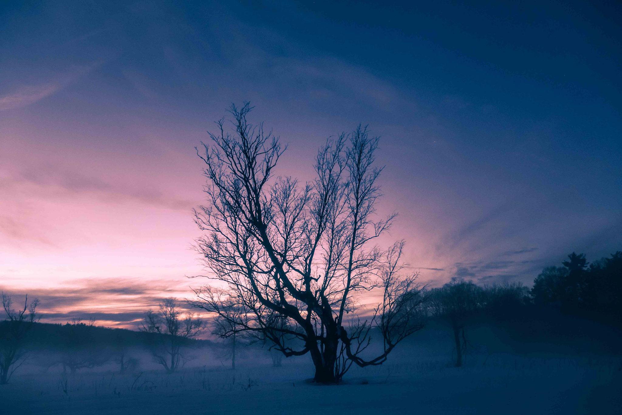 Eisiges Moor am Abend; Schopflocher Moor