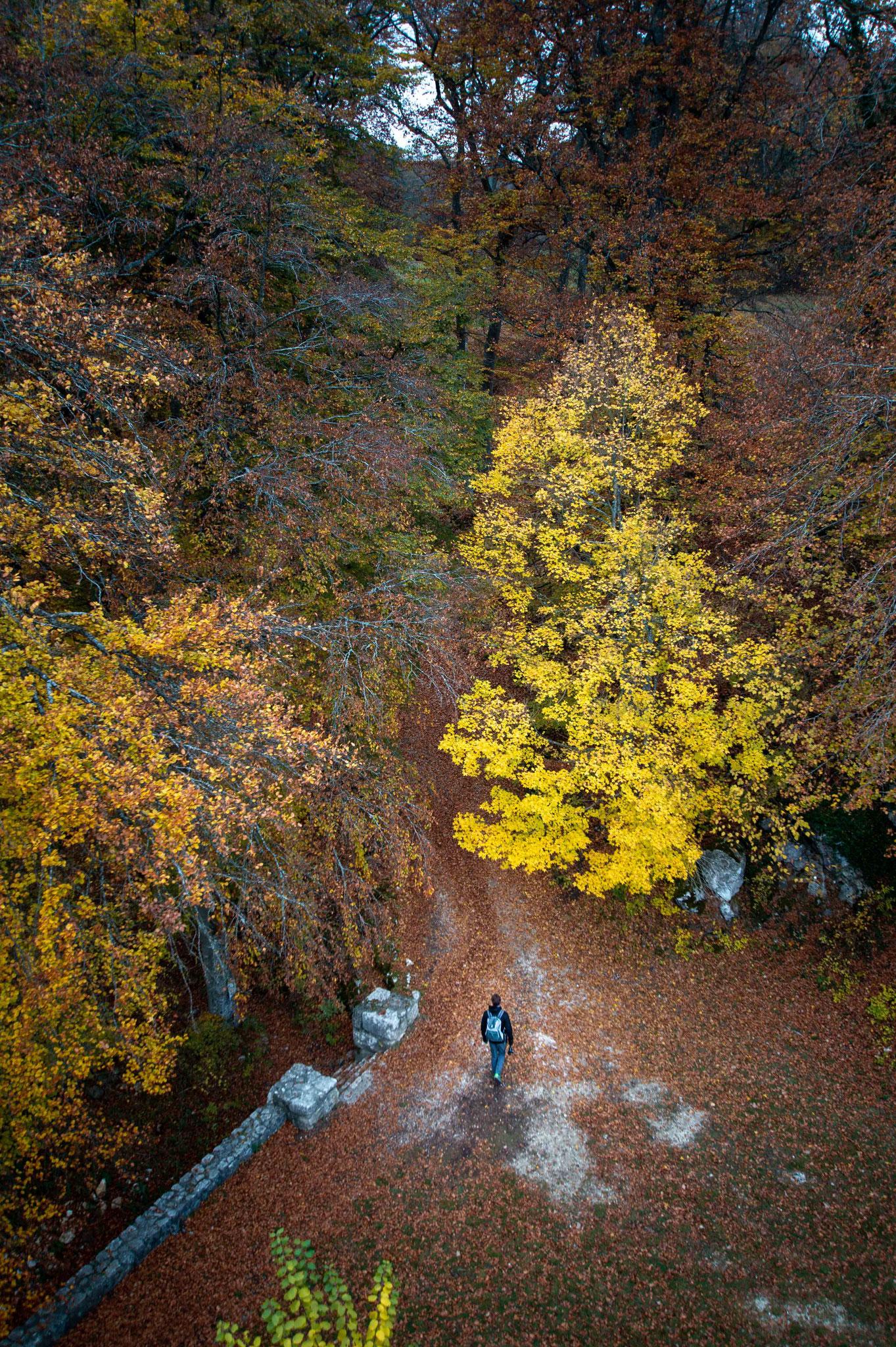 Einsamer Wanderer im Herbstwald; Lautertal Ruine Hohen Gundelfingen