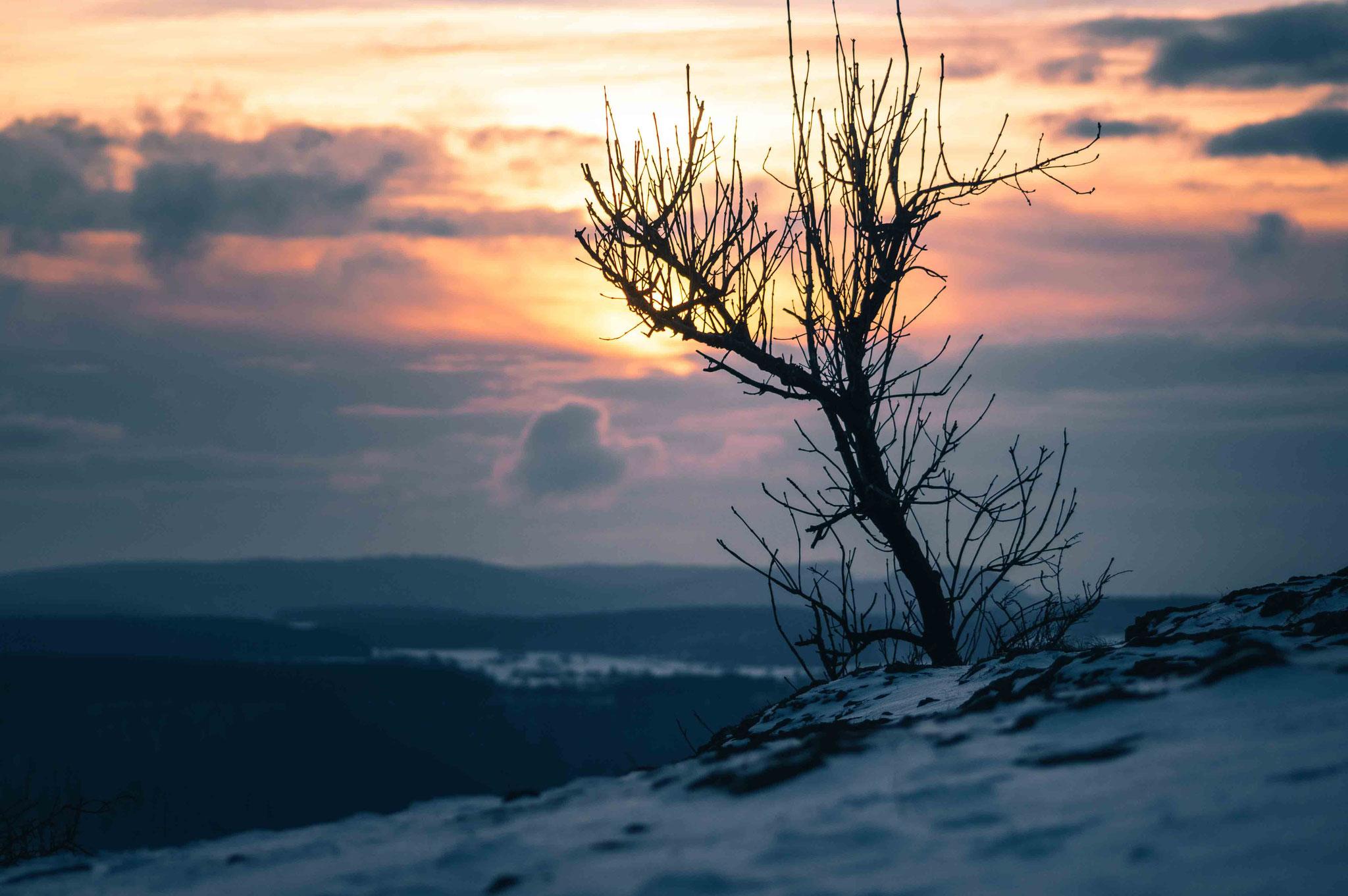 Baumshilouette bei Sonnenuntergang; Breitenstein