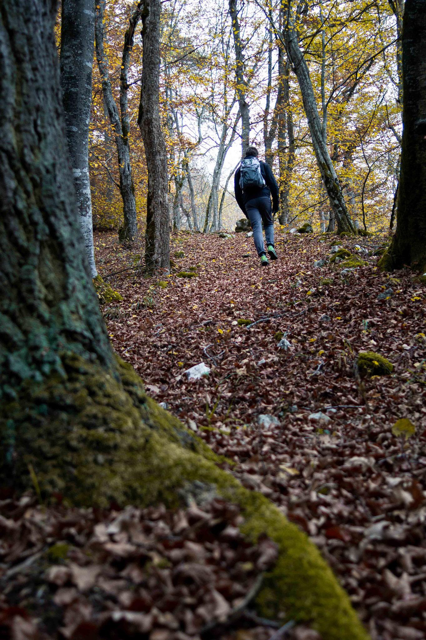 Wandern im Herbstwald; Lautertal