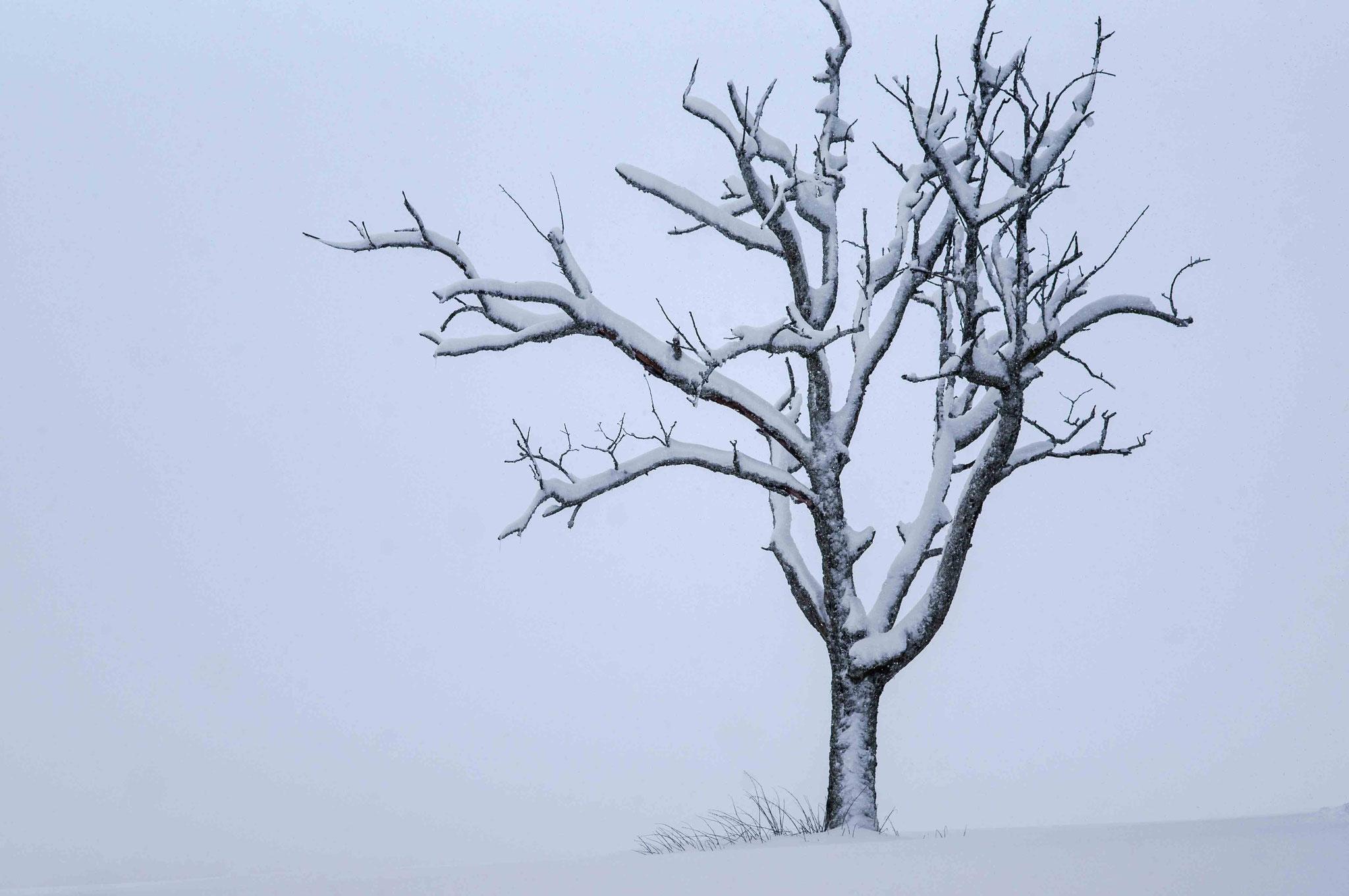 Weißer Baum; Schwäbische Alb bei Römerstein