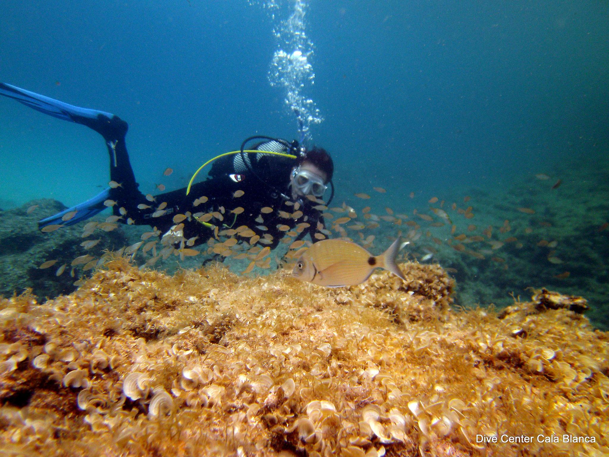 Especialidad ecología marina