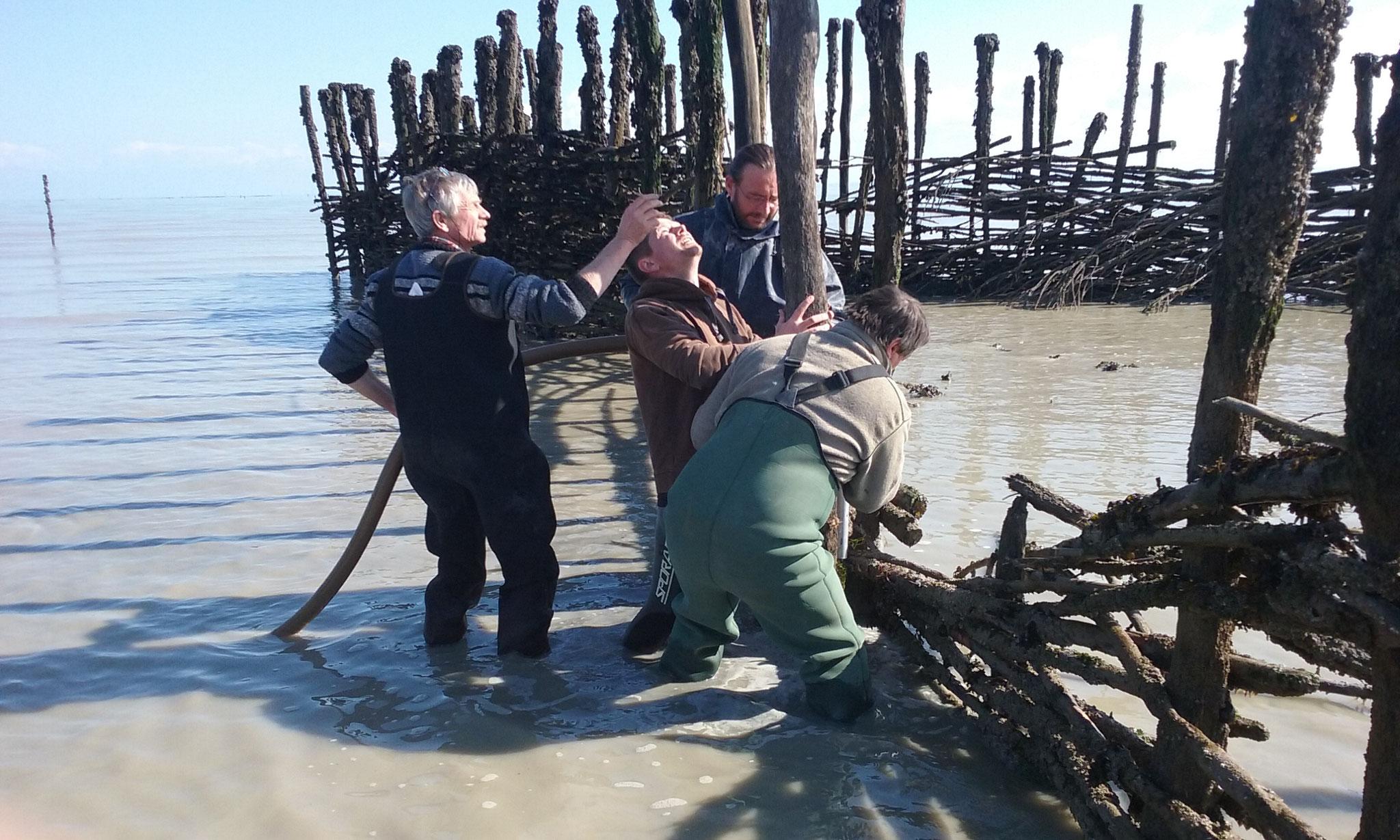 Restauration de la pêcherie (plantage de pieux)