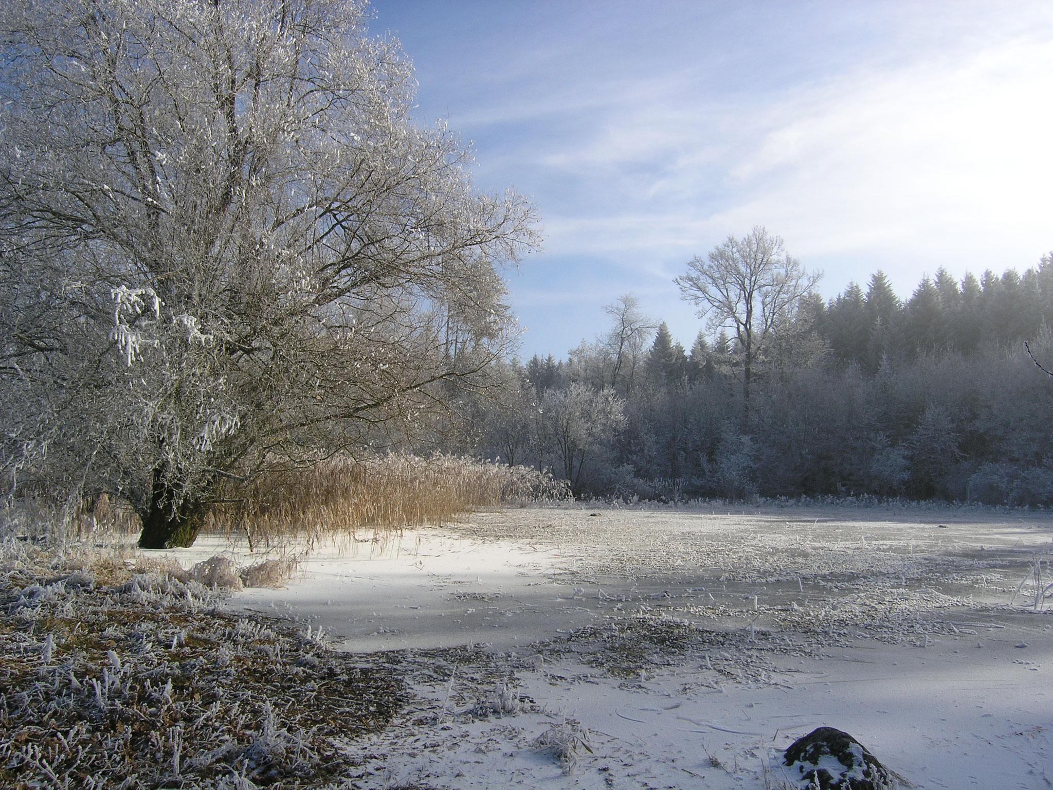 Winterruhe am Widi